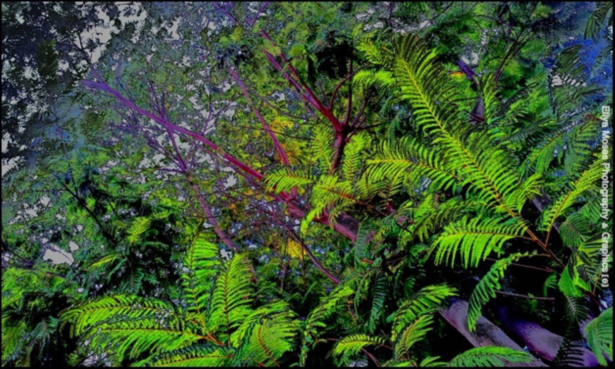 Jungle Feaver  by Eliya.M. Moses