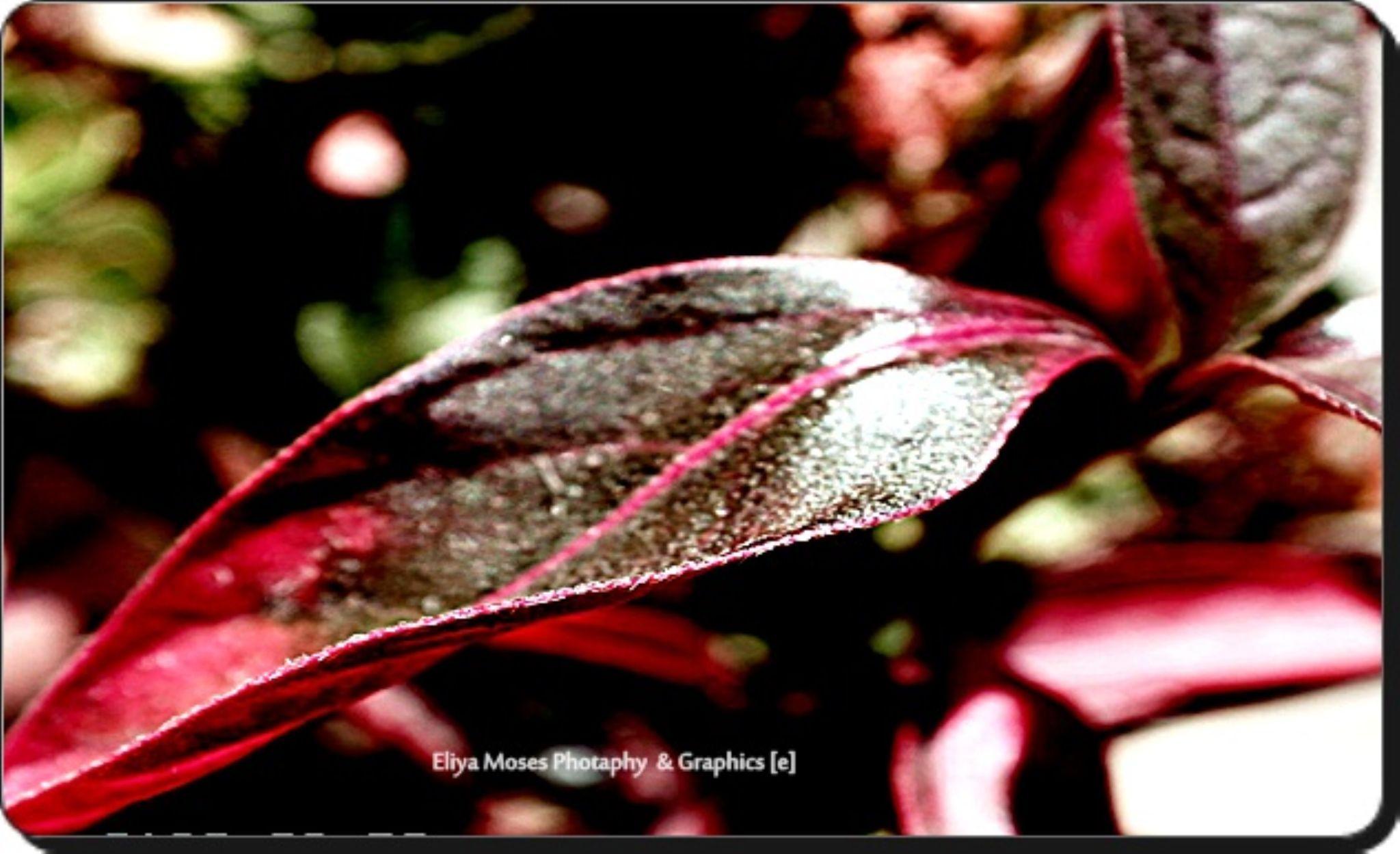 SAM_5183 by Eliya.M. Moses