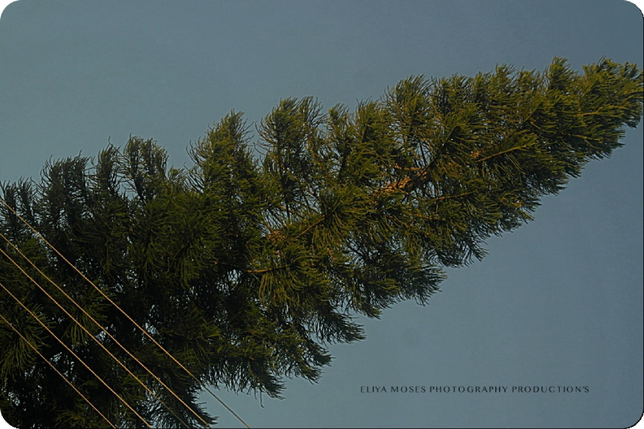 Untitled by Eliya.M. Moses