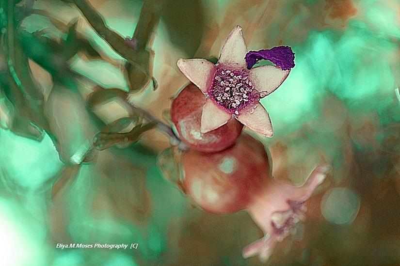 Artistic...  by Eliya.M. Moses
