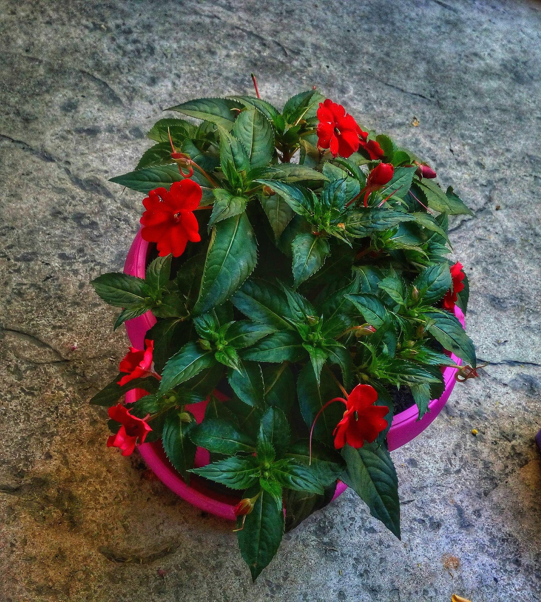 Flower by Milica Bogdanovic