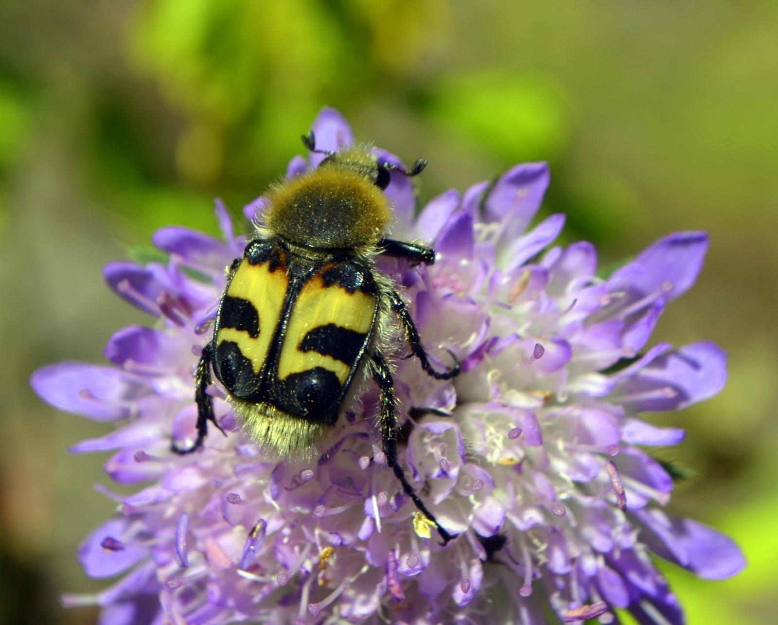 Little beetle by Vida Vidaite
