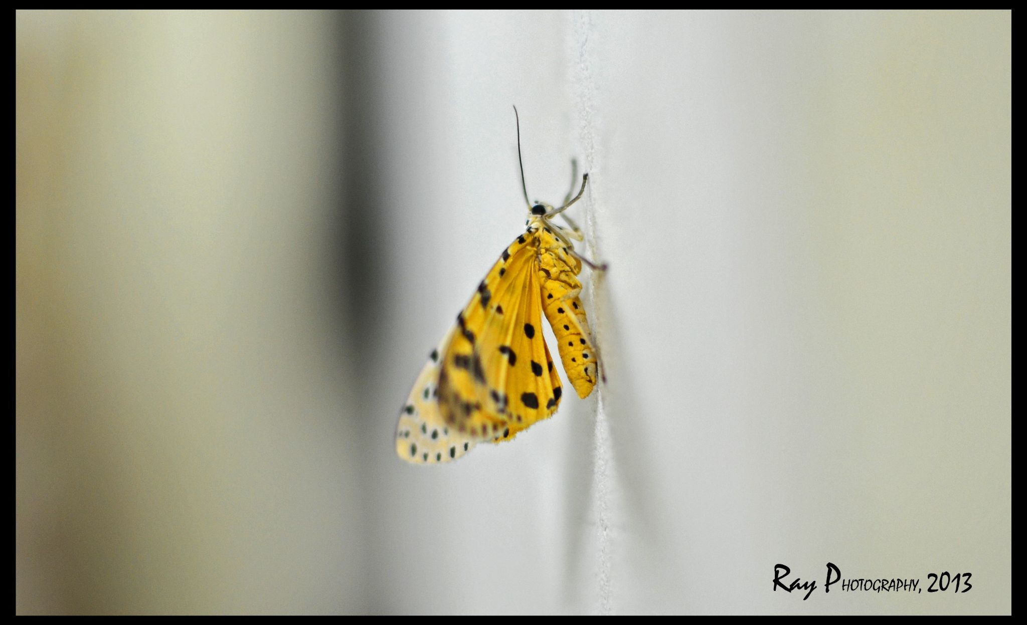 Insect....... by Ray Photography( PRITAM RAY )