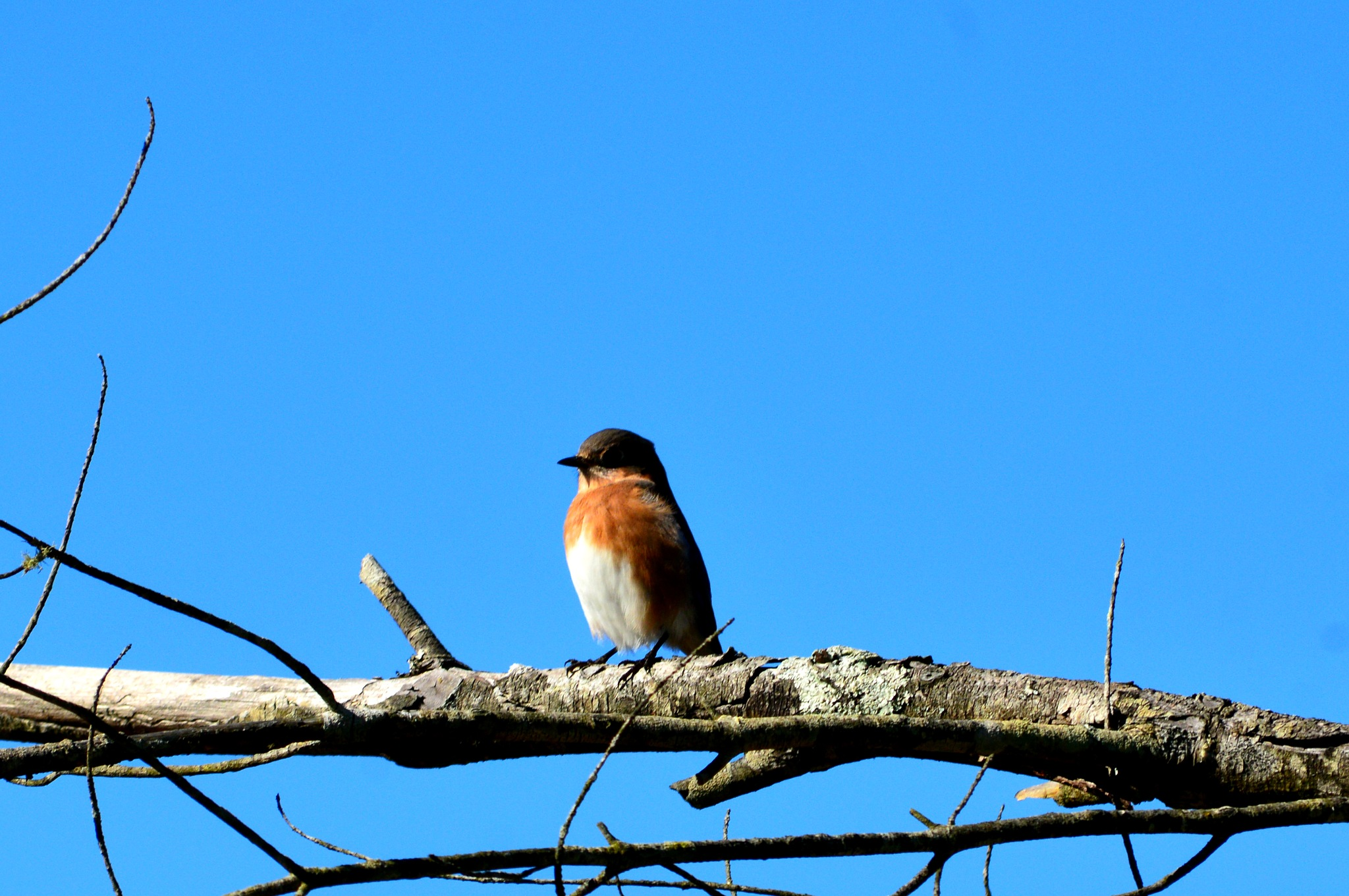 Bird on a limb by Robby