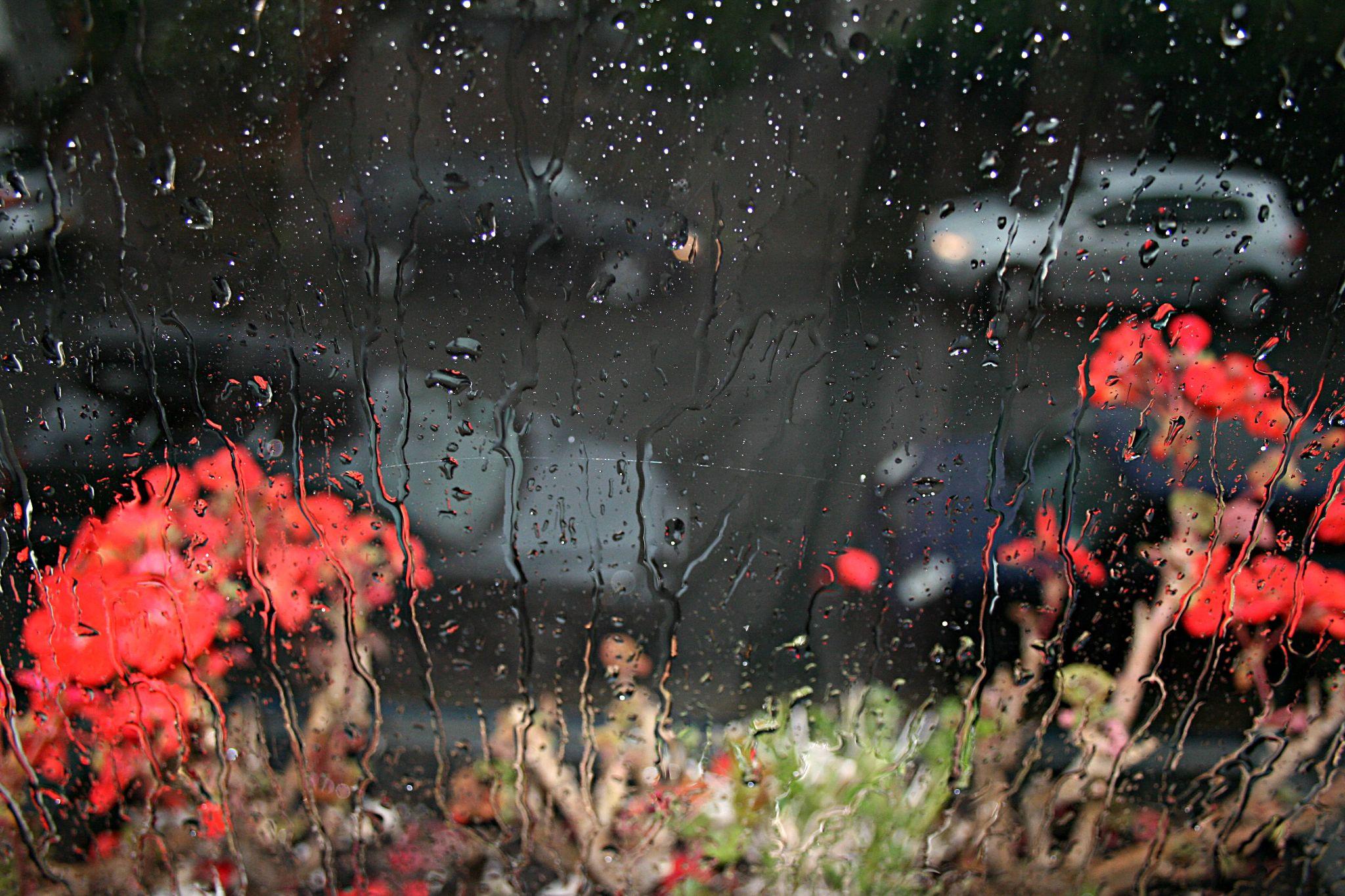 Rainy window by Ada N