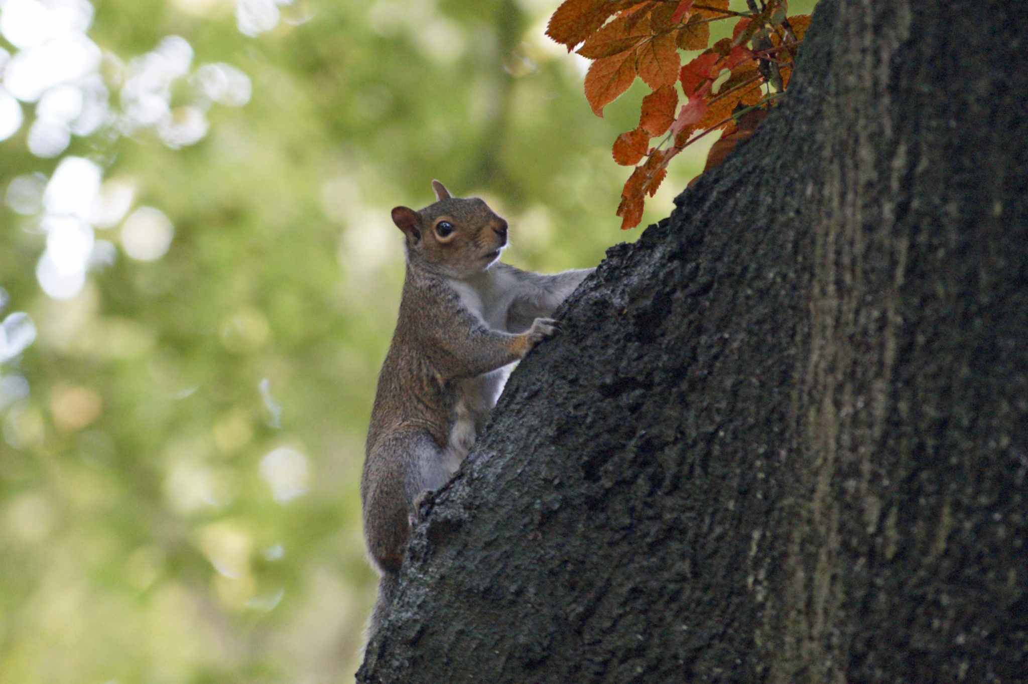 Squirreling Away by janiscornwall