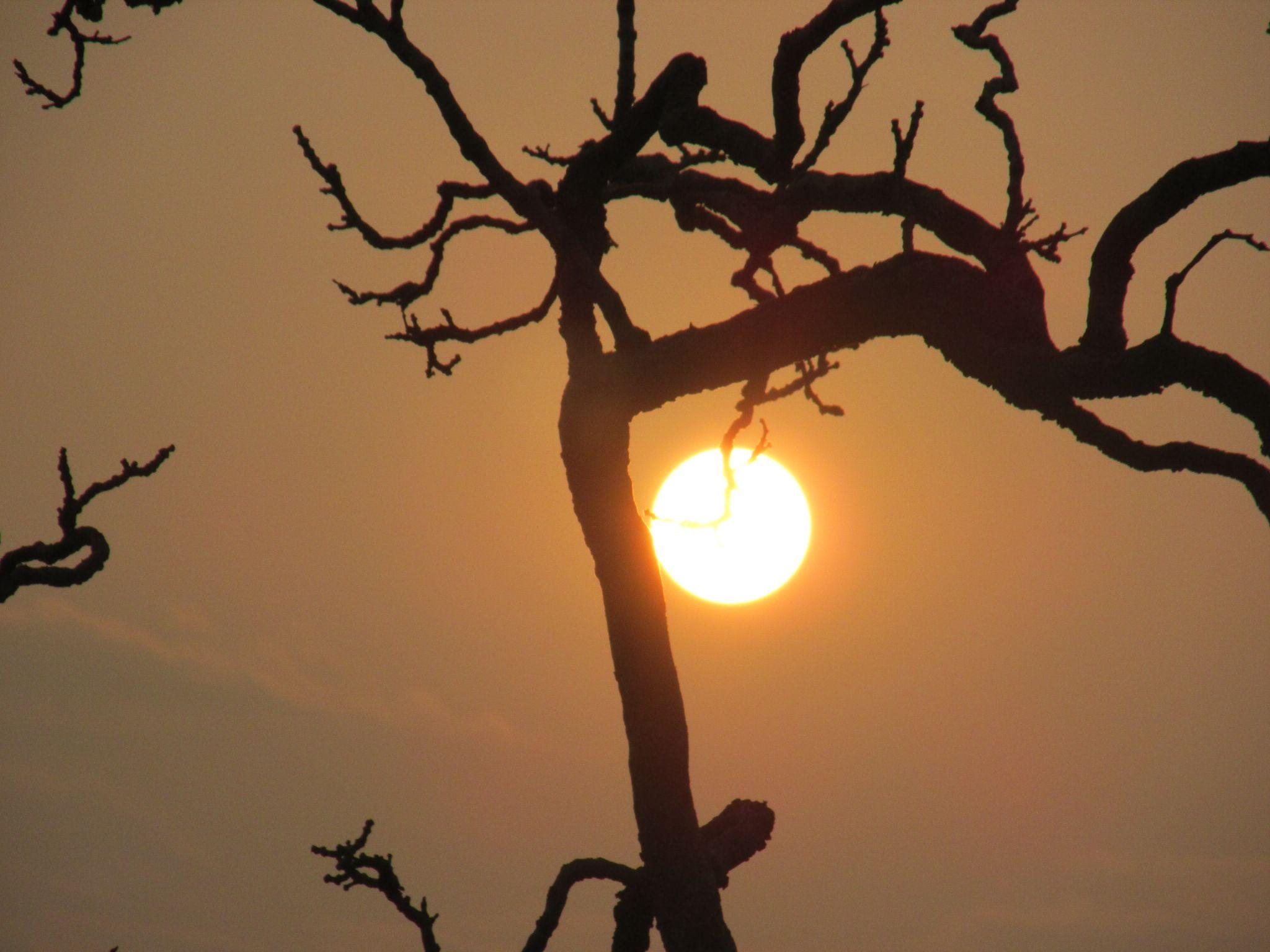 Sunset... by Vinayak Patukale