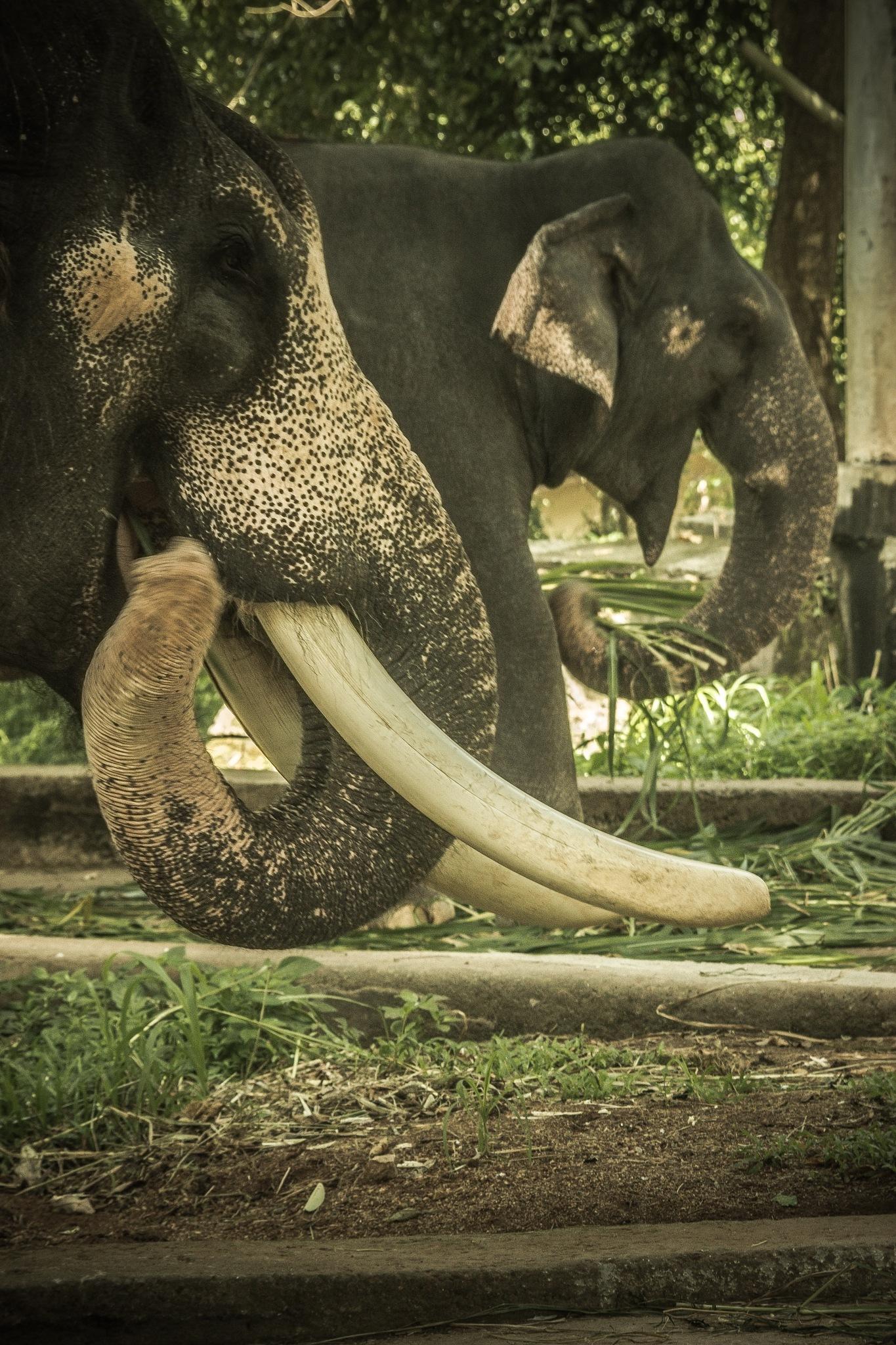 Tusk  by Jithin G
