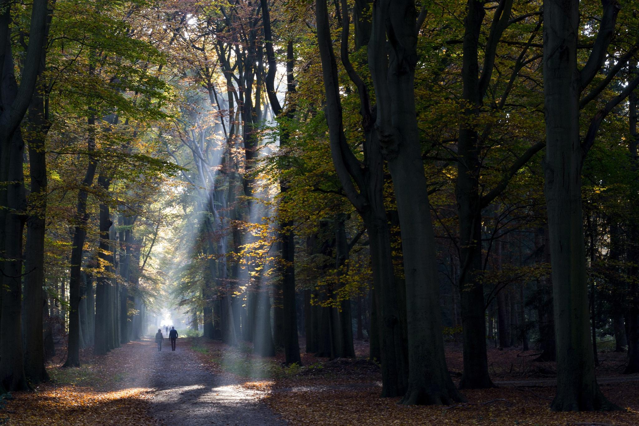 The Walk by Rob van der Griend