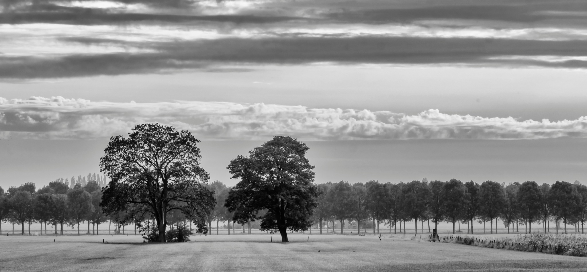 Two Trees by Rob van der Griend