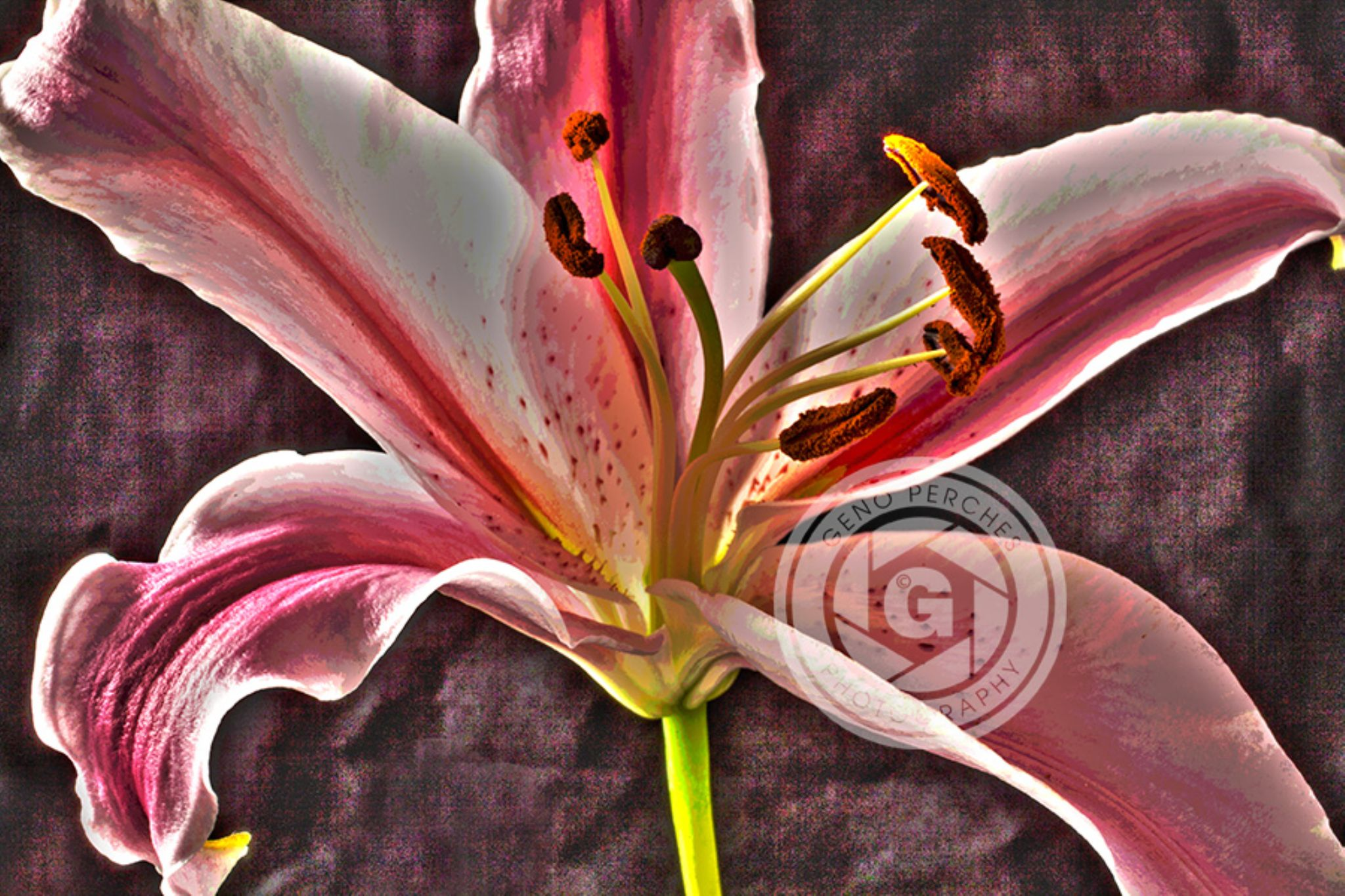 IMG_0604s by Geno Perches
