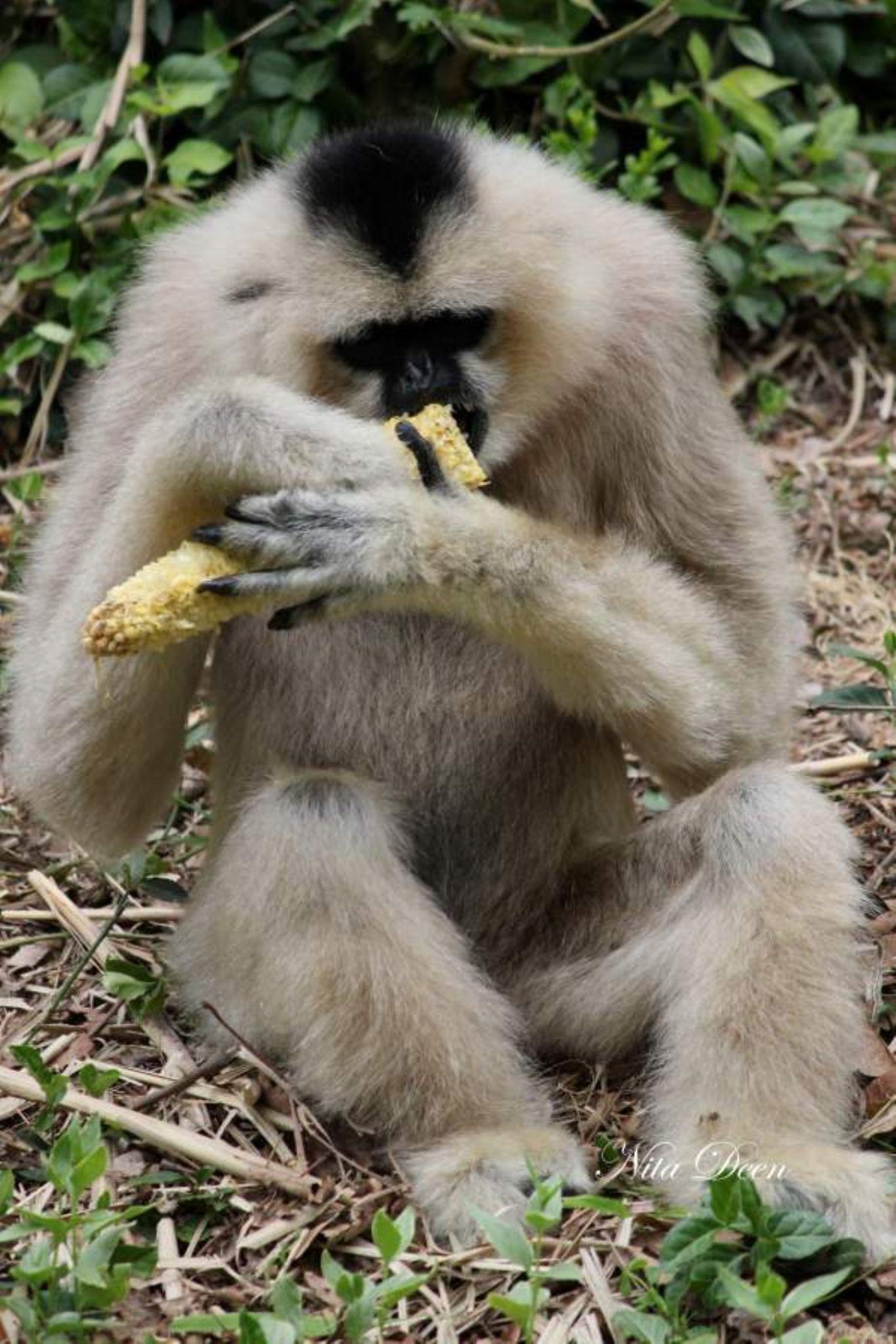 Nashville Zoo by nitadeen