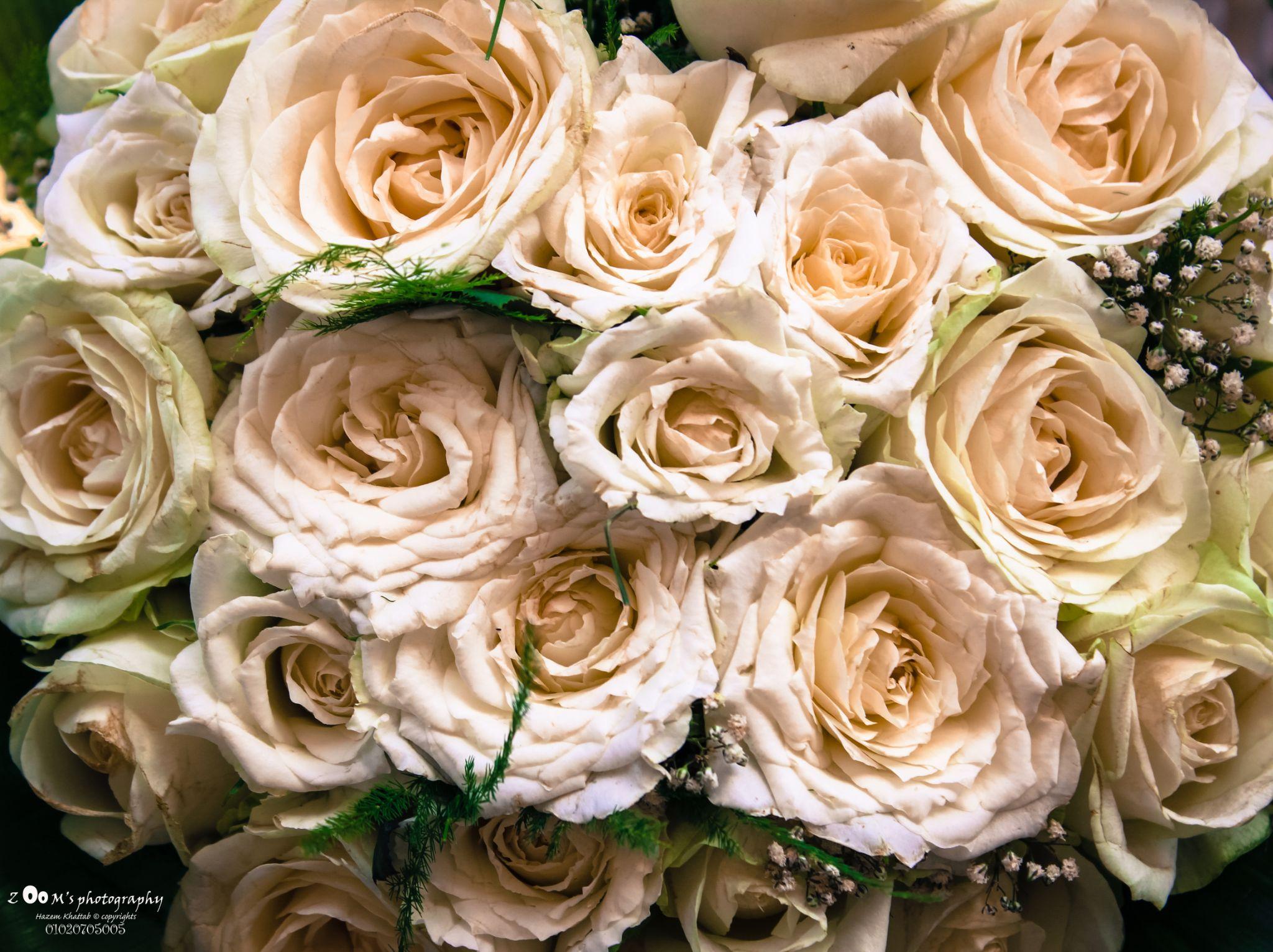 roses by Hazem_Khattab