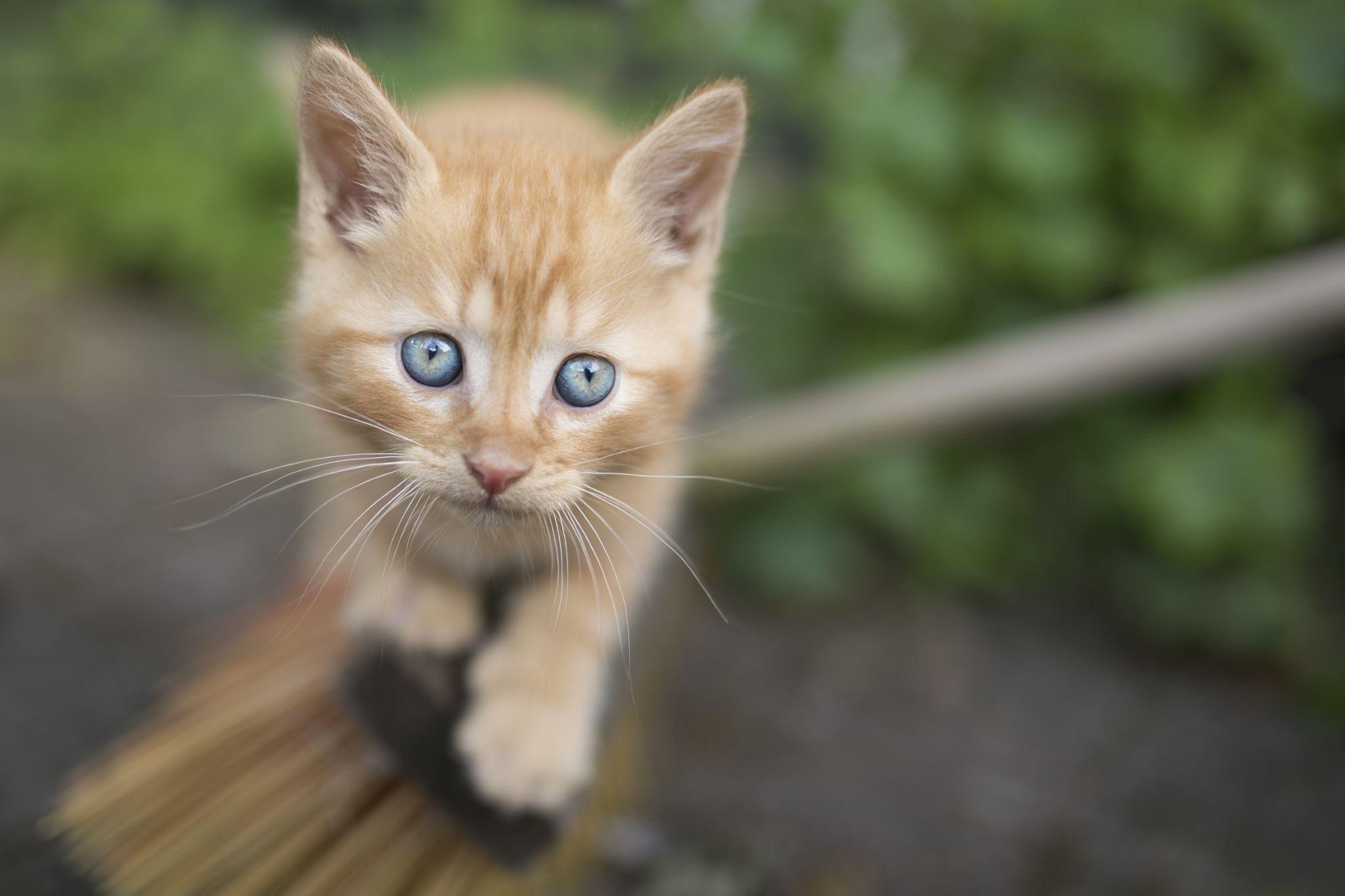 Kittie on adventure by dennislarsen988