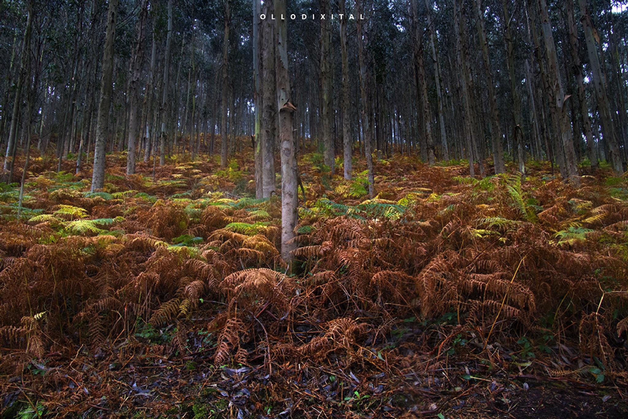 Autumn landscapes by OlloDixital