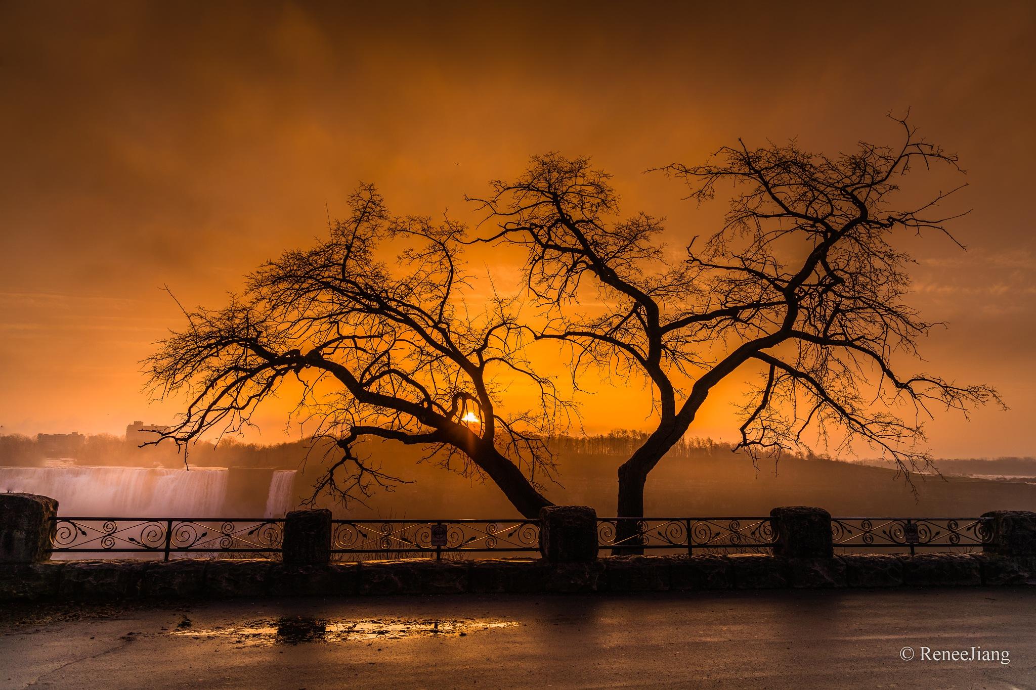 Sunrise at Niagara Falls by Renee