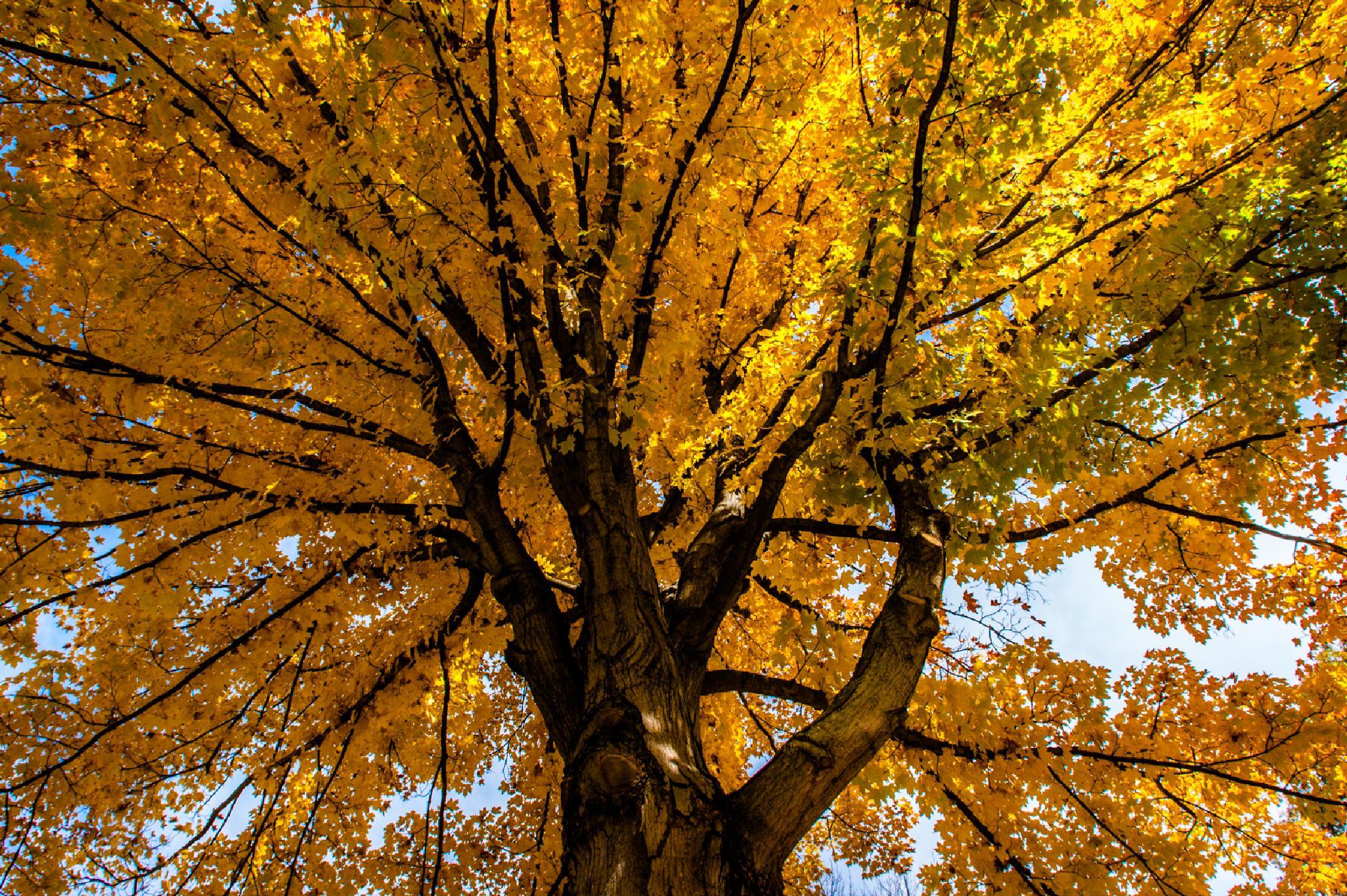 Fall branches by Kali Morgan