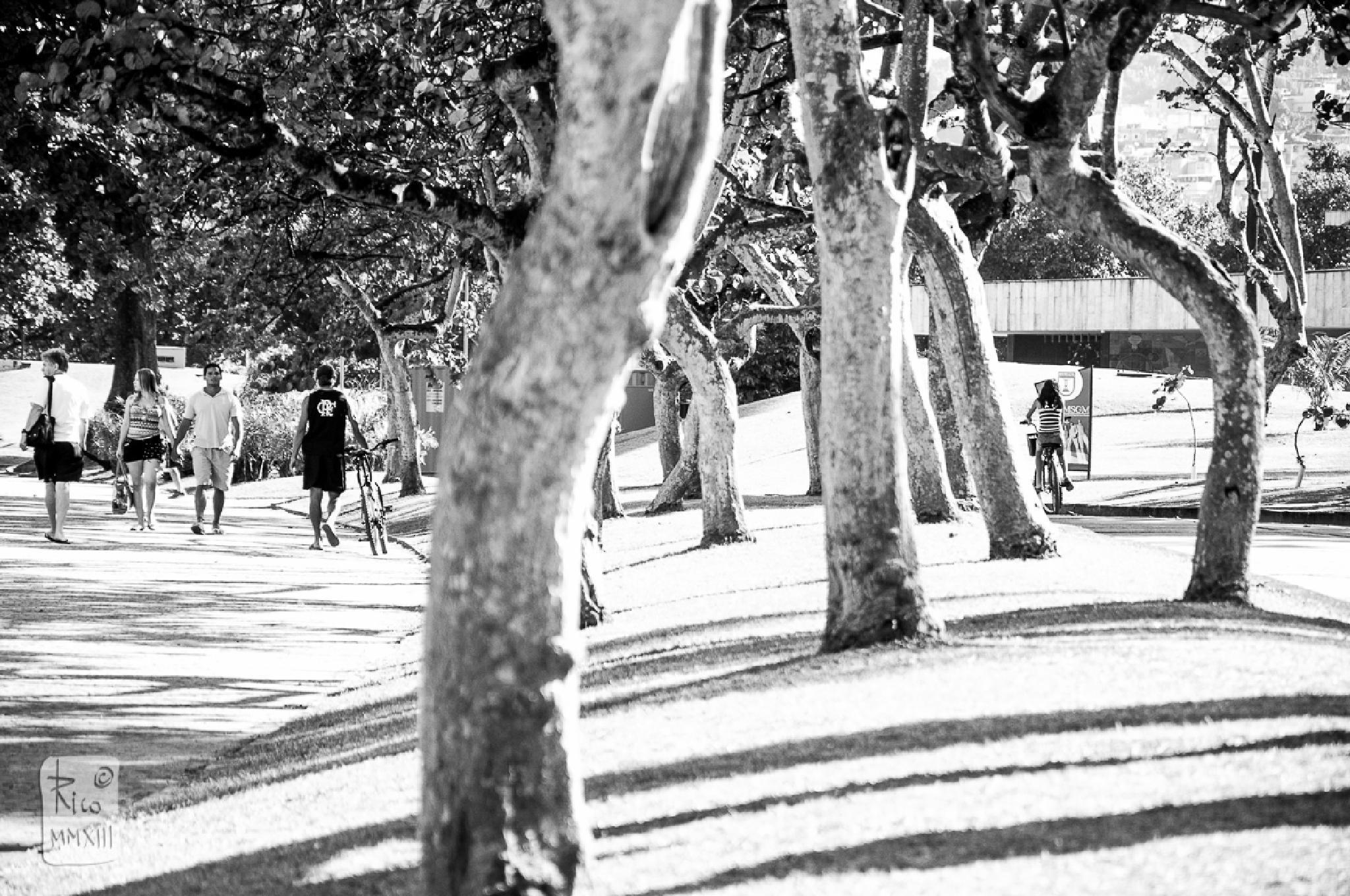 MAM - Parque do Flamengo by Rico