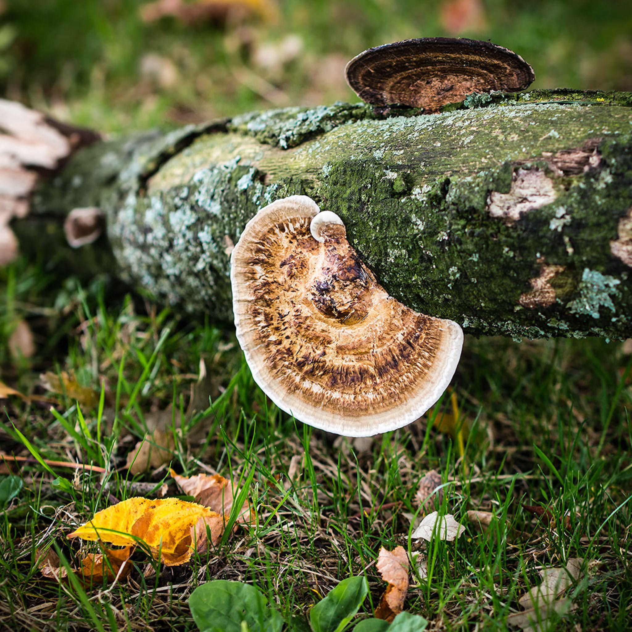 Bracket fungi by DavidNorfolk