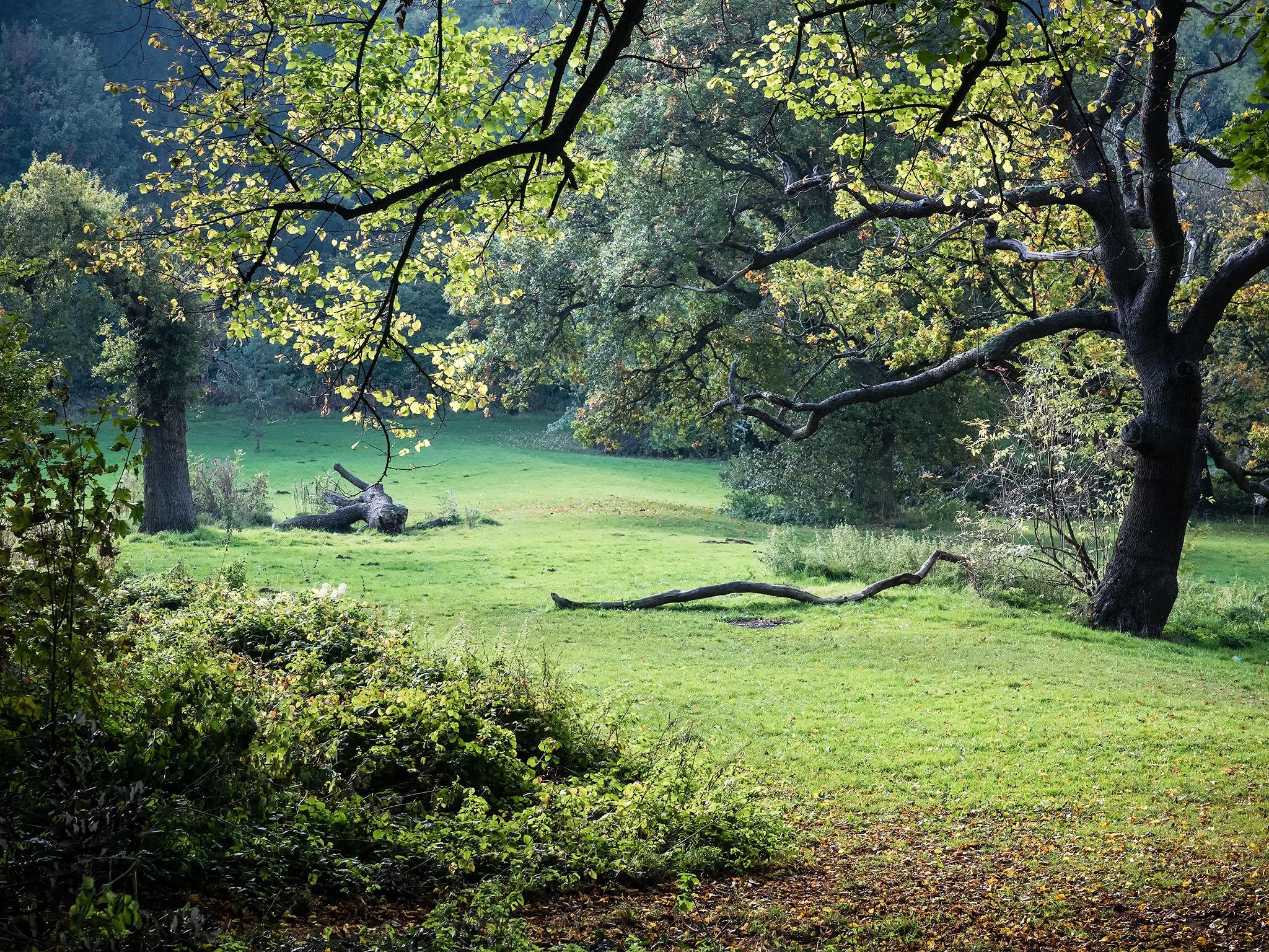 Woodland scene by DavidNorfolk
