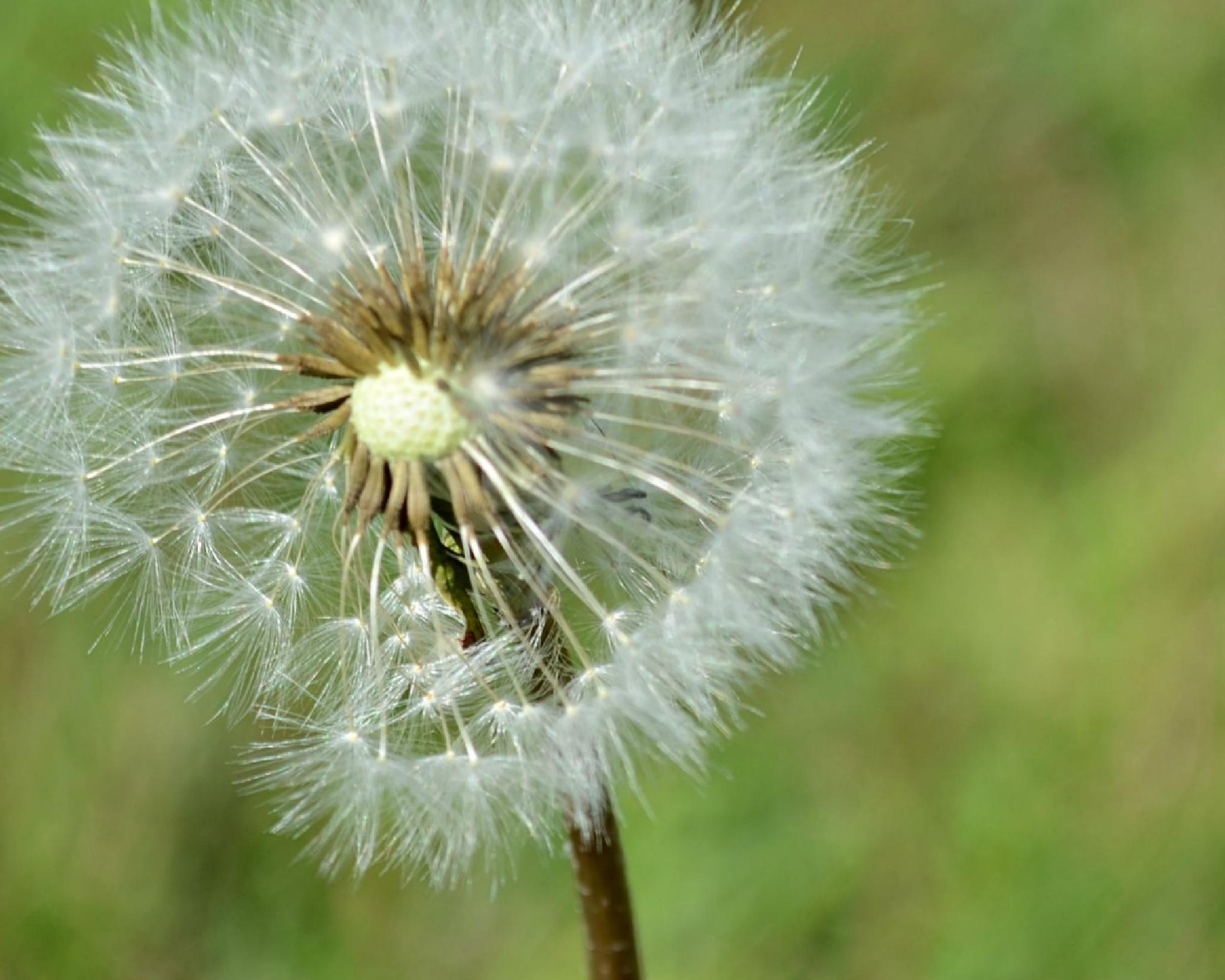make a wish by Tiffany Lea Ayotte