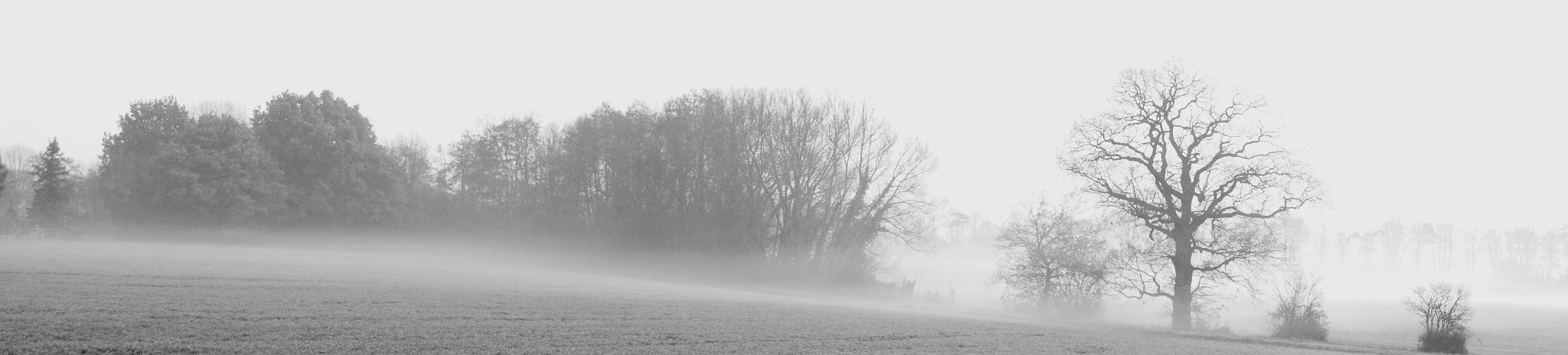 Early morning mist. by WhiteArtPhotography