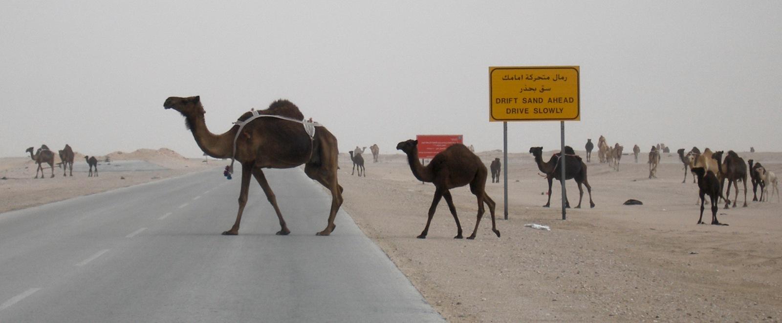 Traffic jam,  Rub al Khali_ by nickcarding