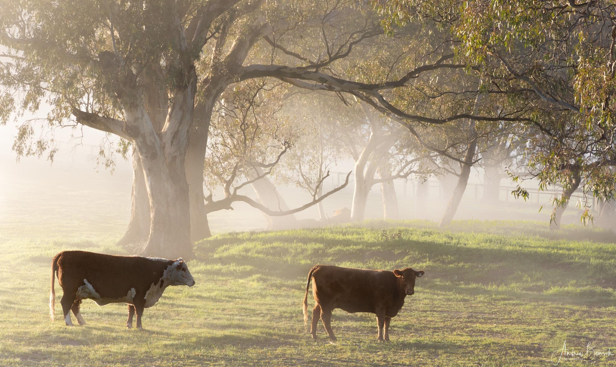 Through the mist by andrewbensch