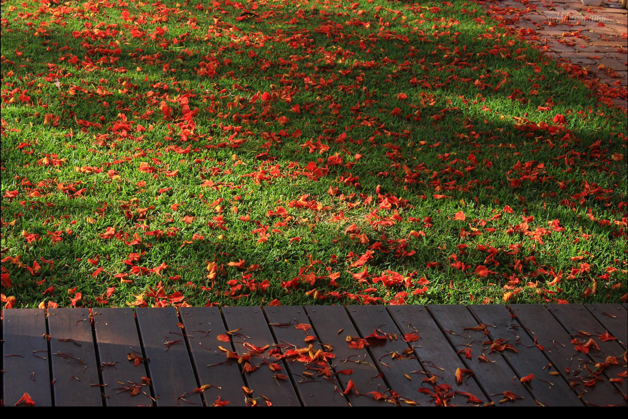 flower carpet by miho.james