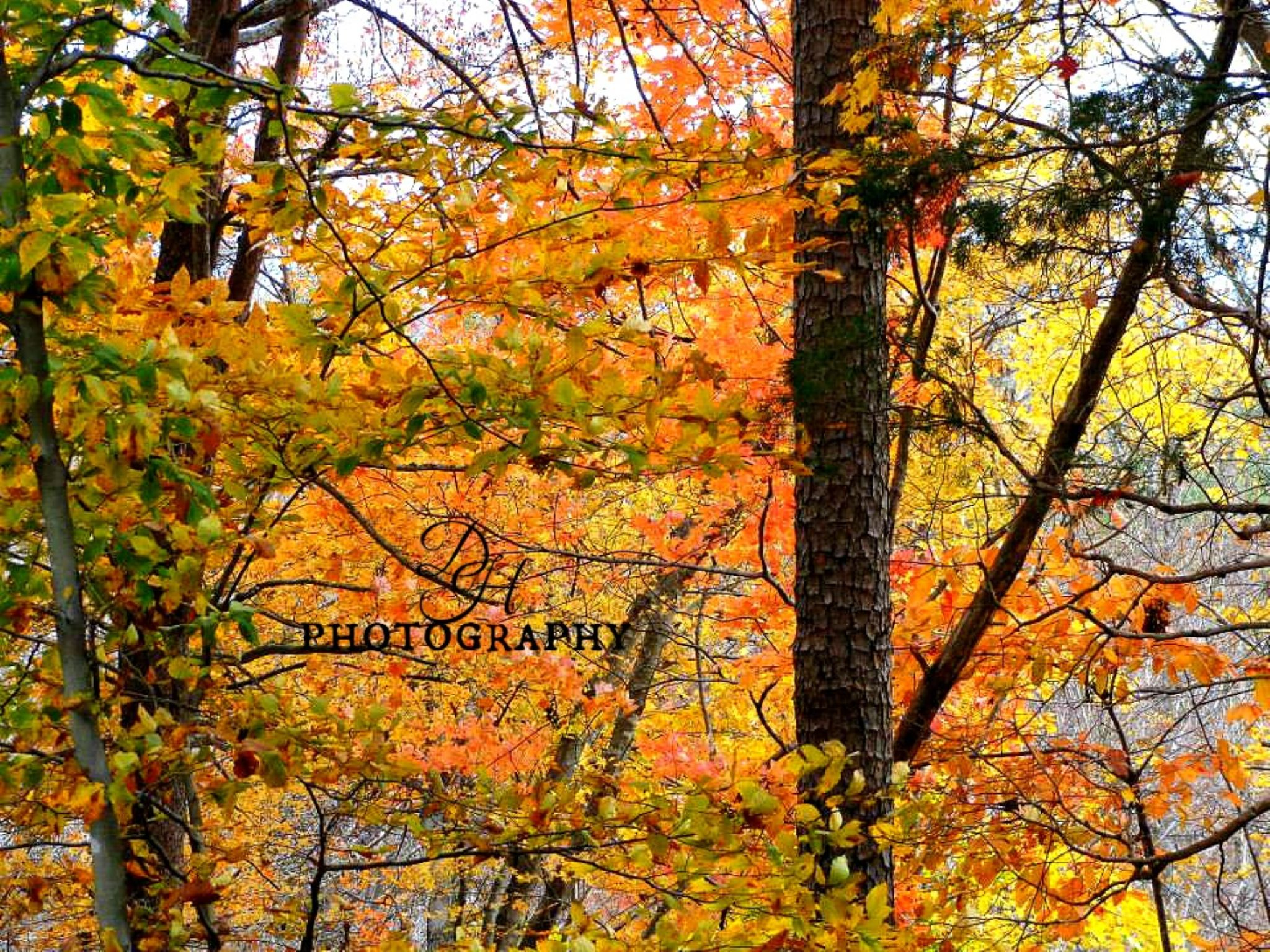 Autumn Colors  by Donna