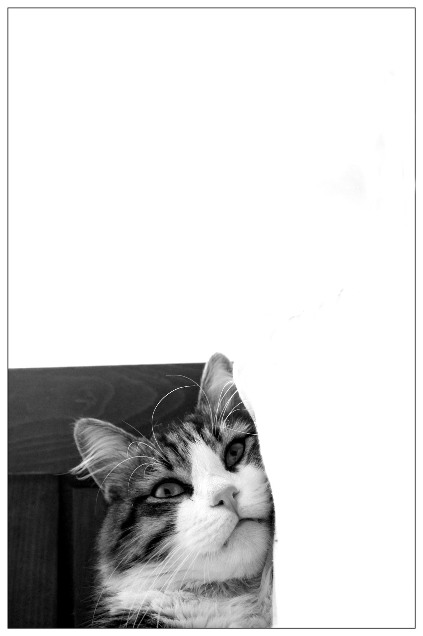 Photo in Black and White #cat #black and white #peace