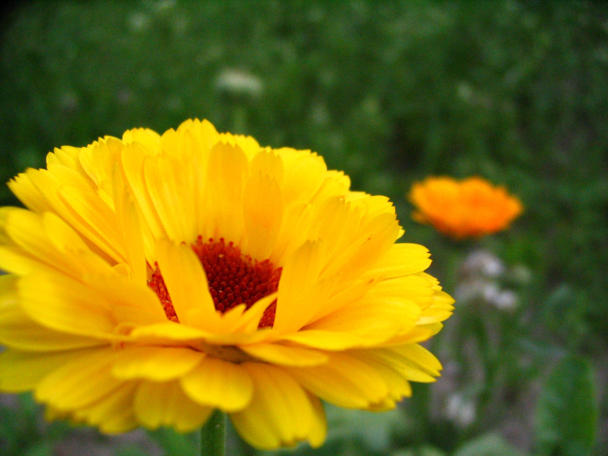 The Yellow with the Orange in the Background by yellowgreen