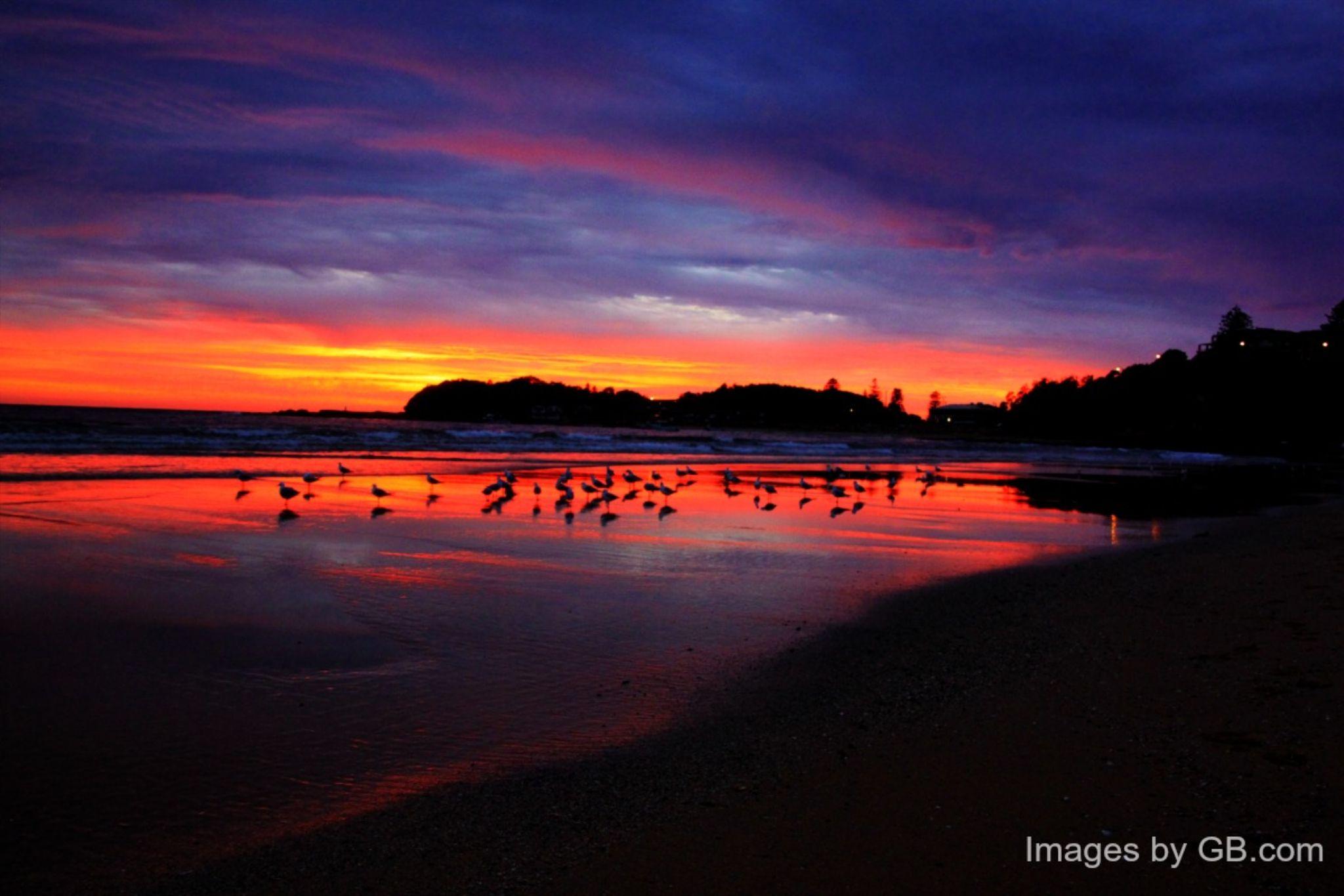 Seagulls at Sunrise by gazzab1712