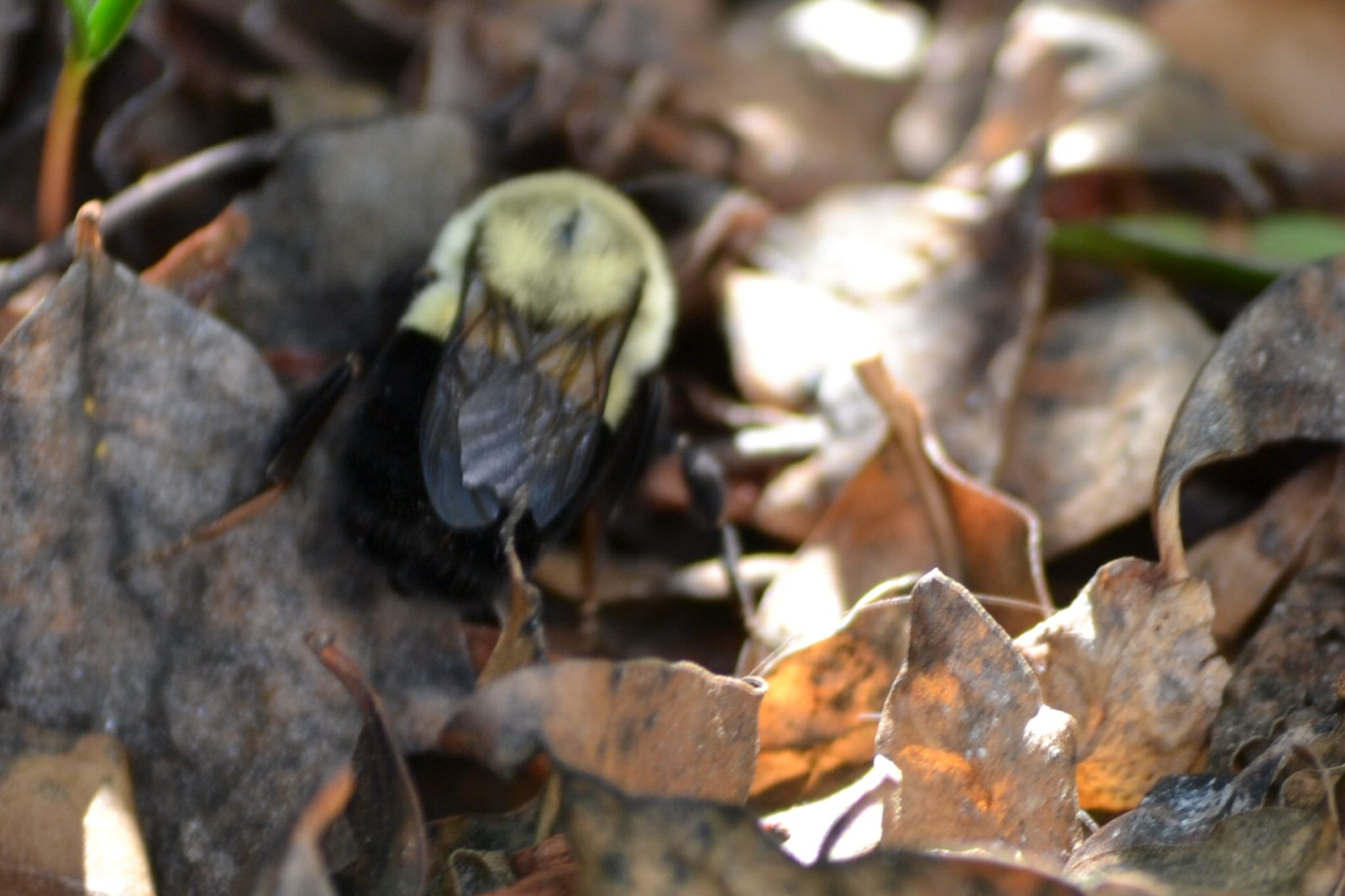bee in my yard by paige.boudle