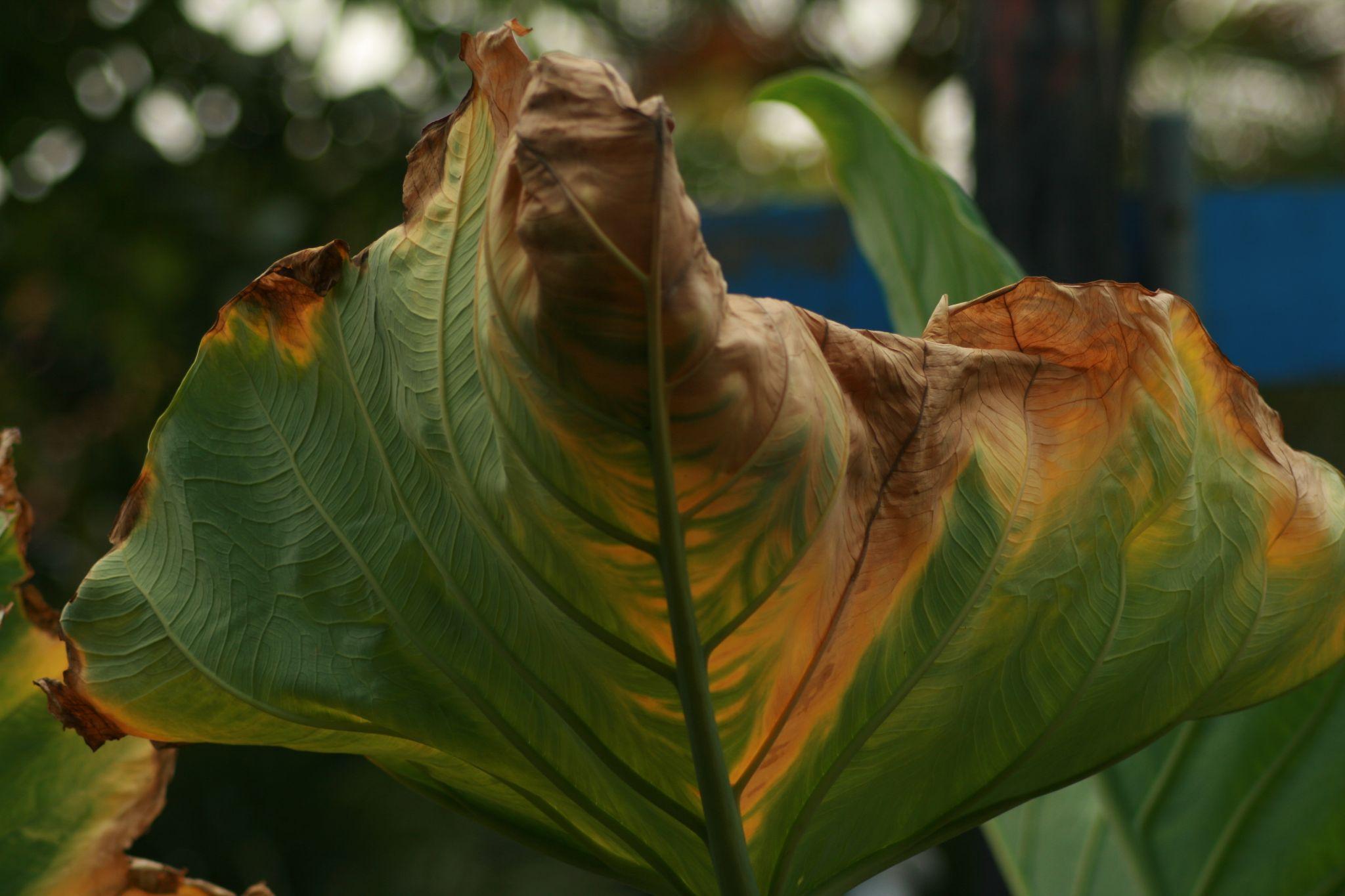 shrink leaf by masedlolur