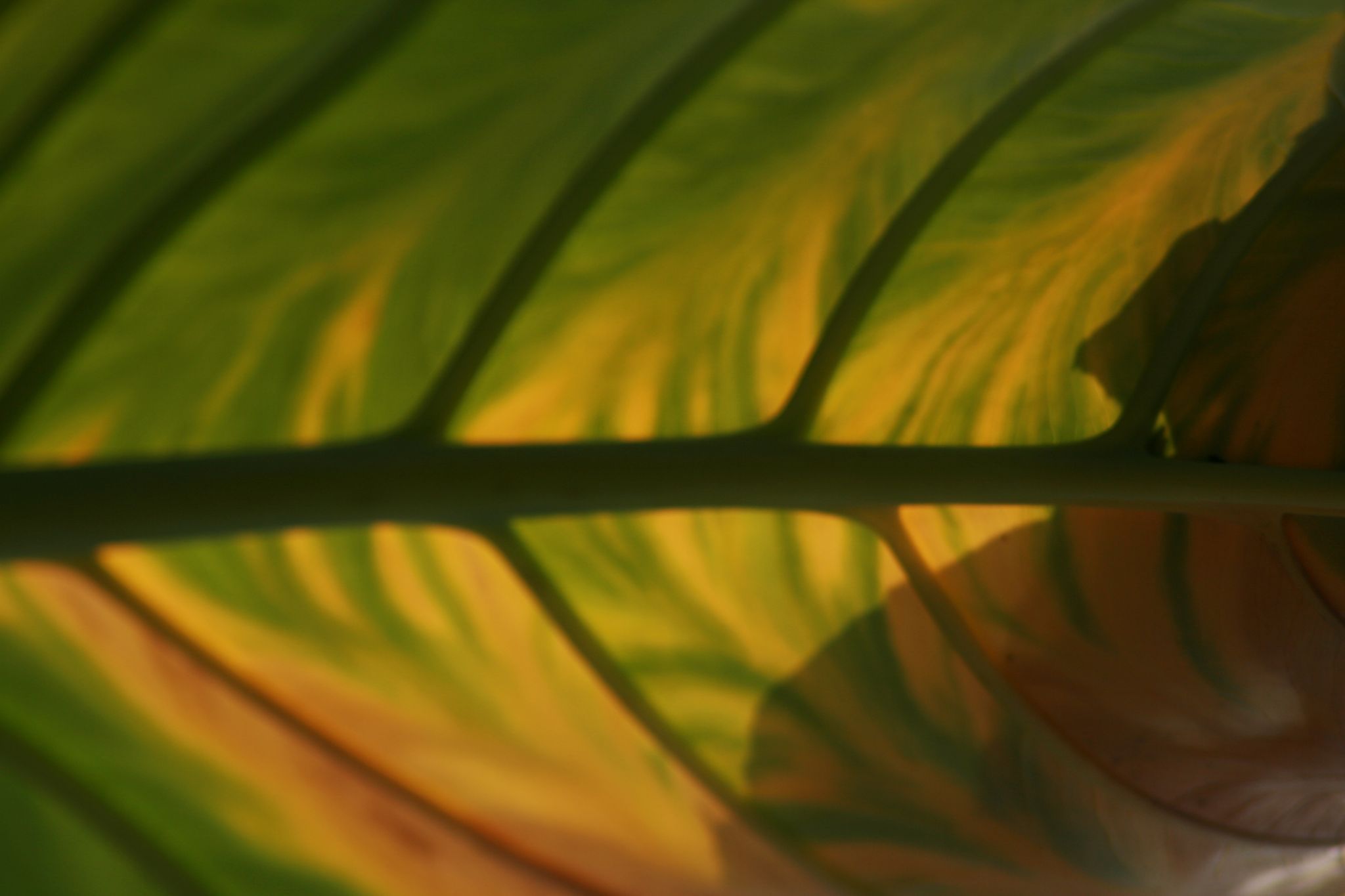 in the backlight leaf by masedlolur
