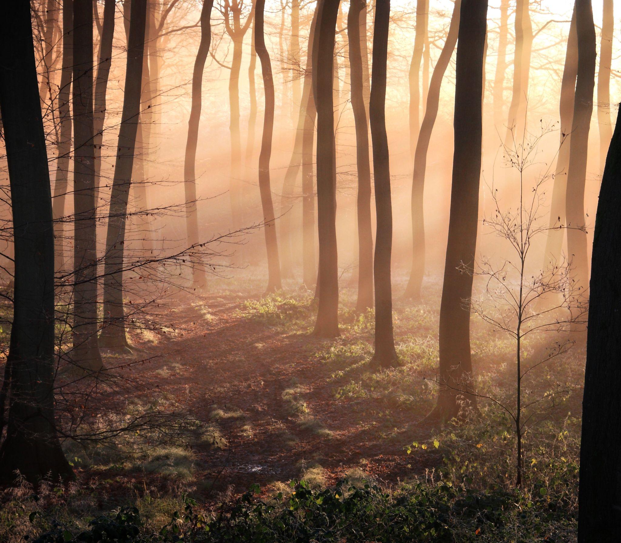 Winter Woodland Light by cerijones14019