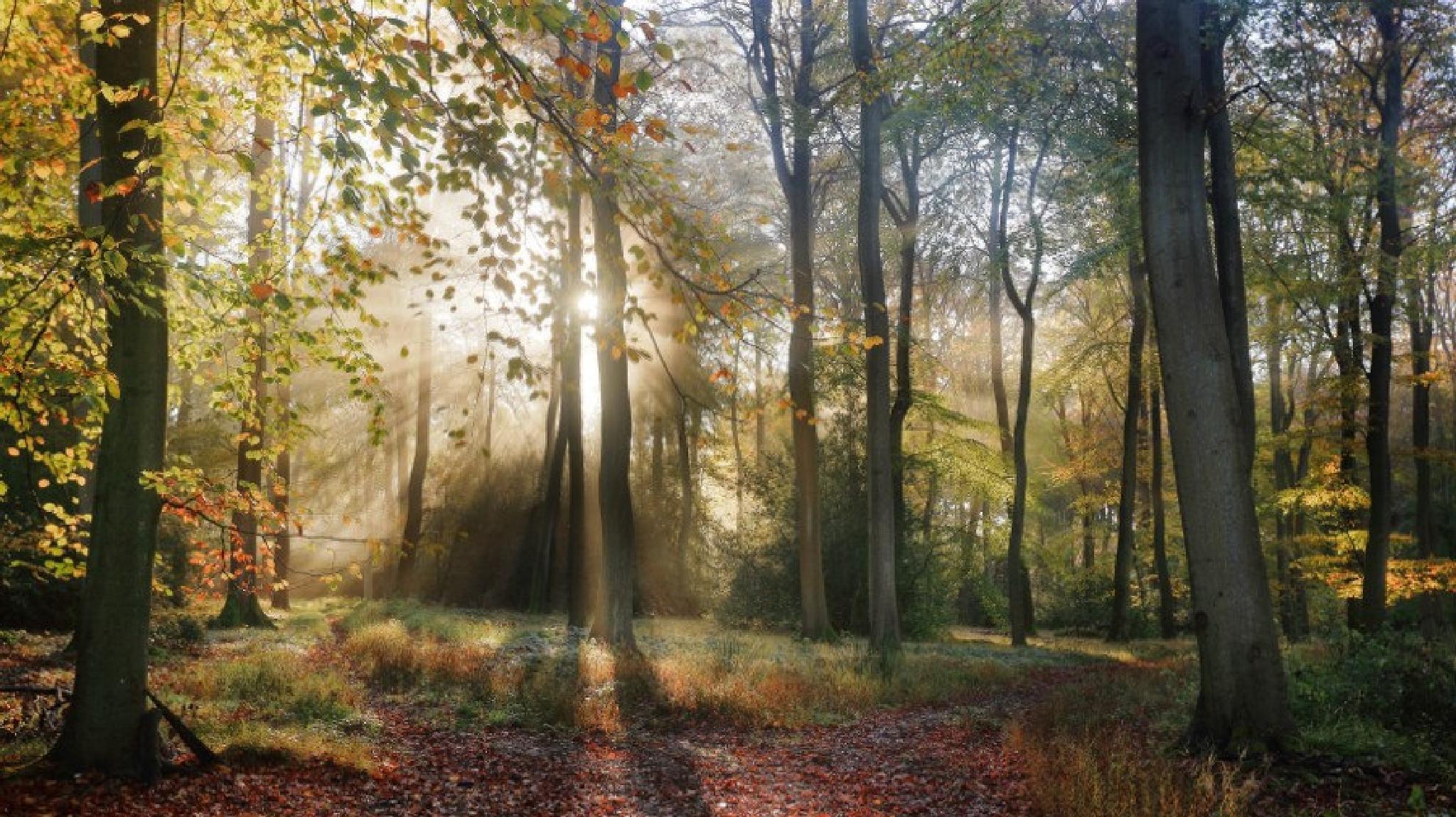 Autumn Morning Woods by cerijones14019