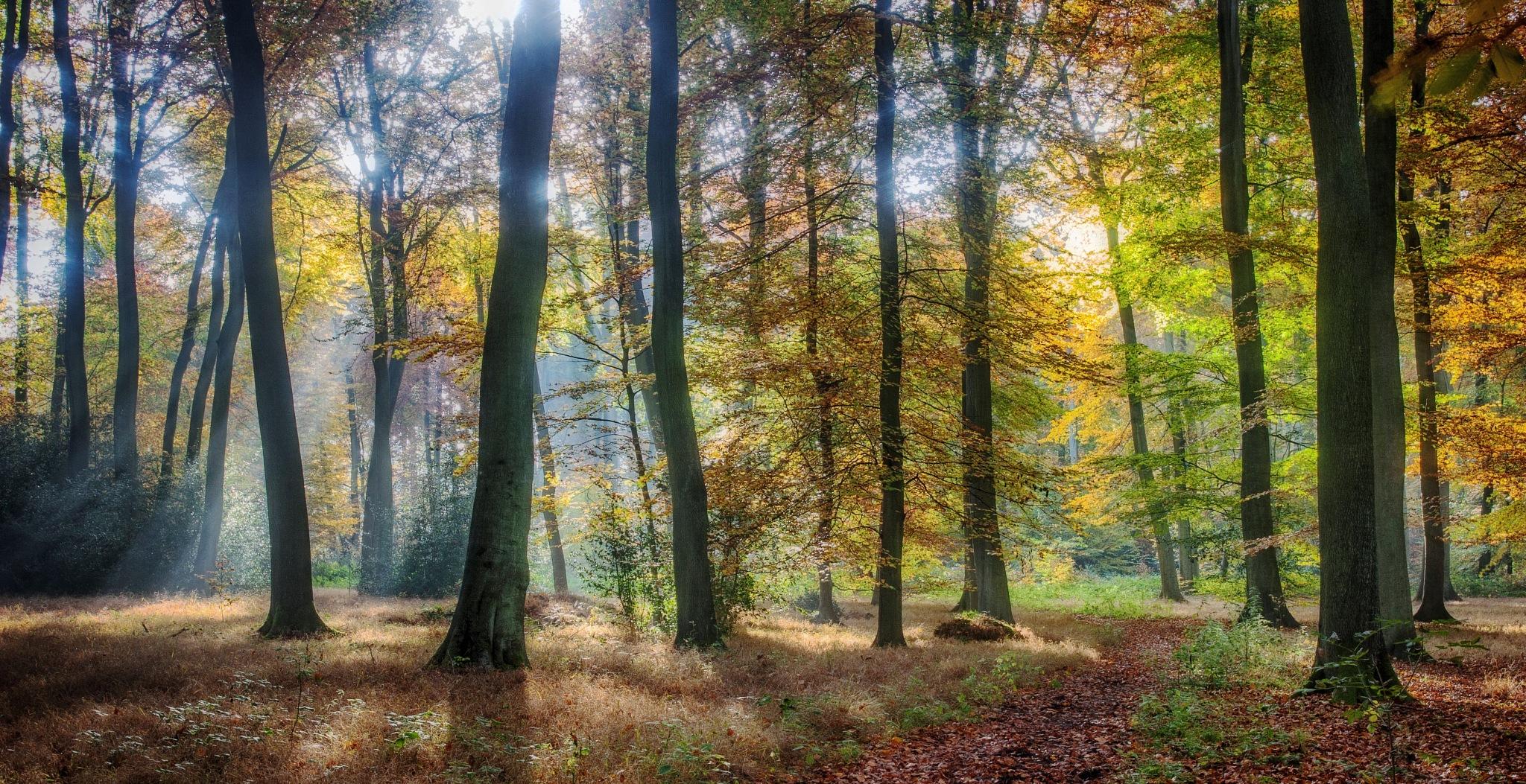 Bright Autumn Woods by cerijones14019
