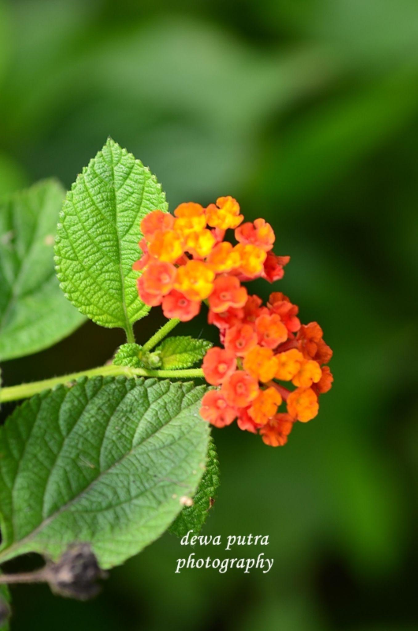 flower by dewaputra