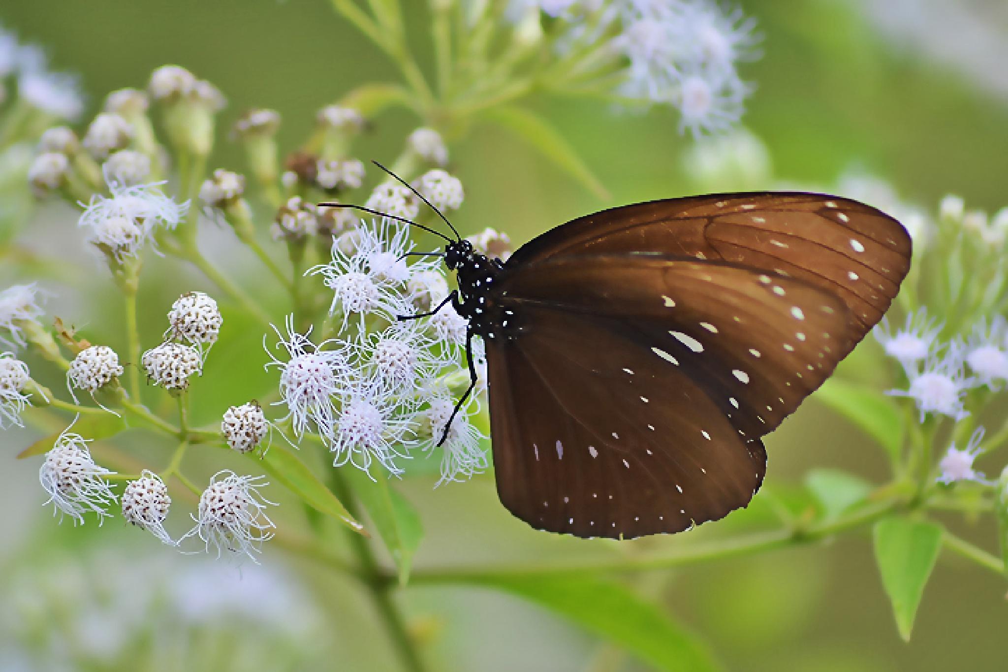 butterfly by dewaputra