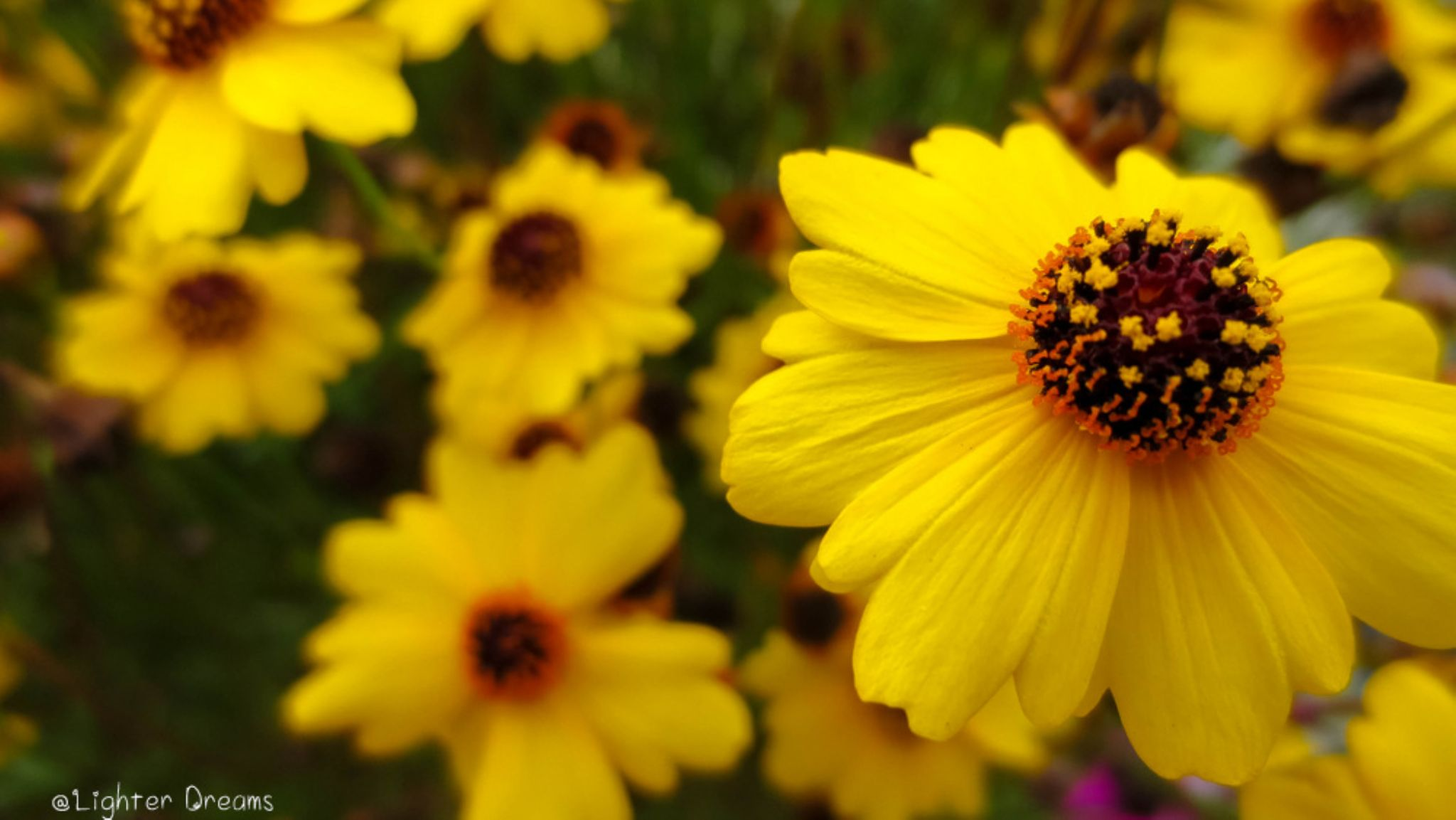Yellow Flowers by LighterDreams