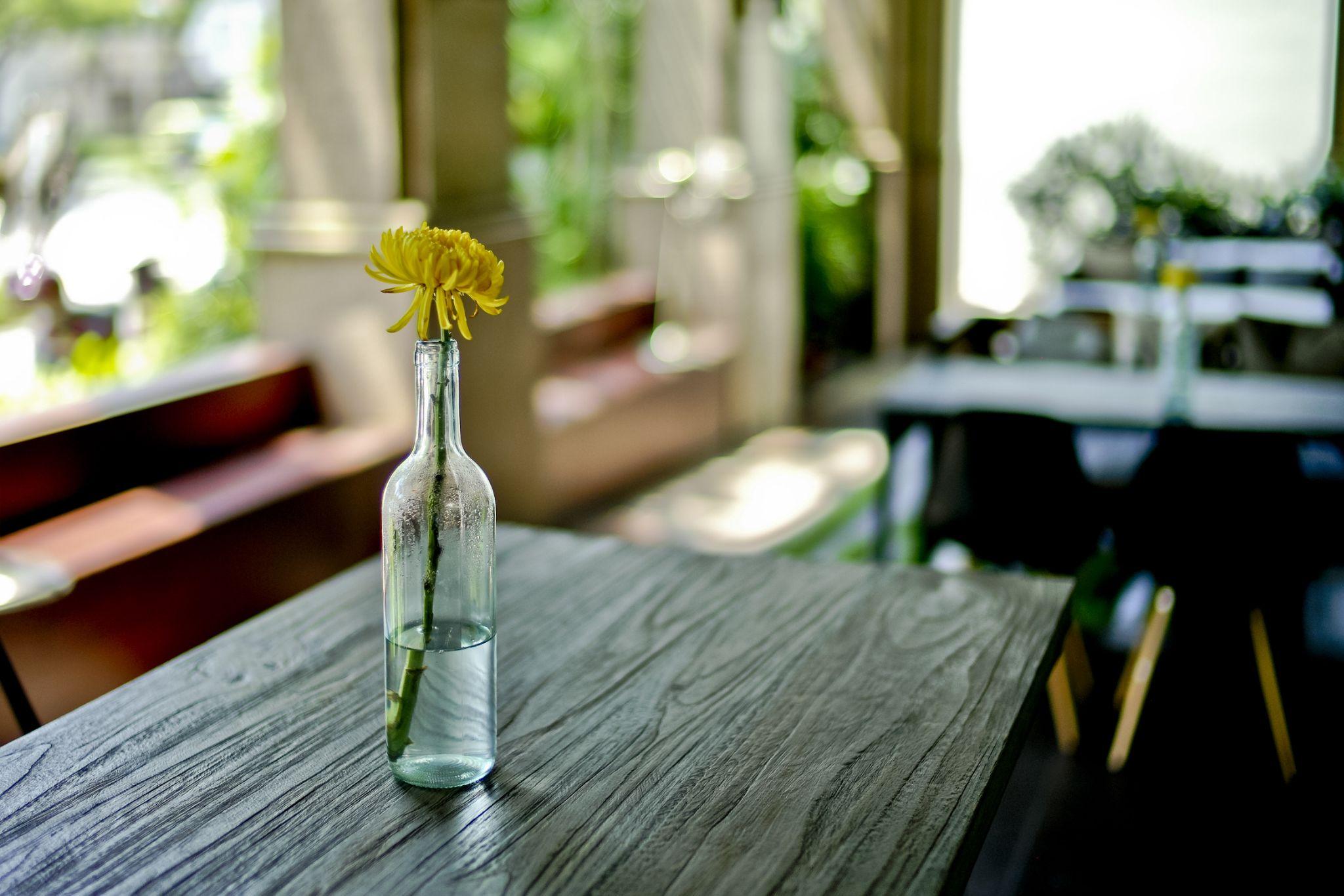 yellow chrysanthemum by Victor Kam