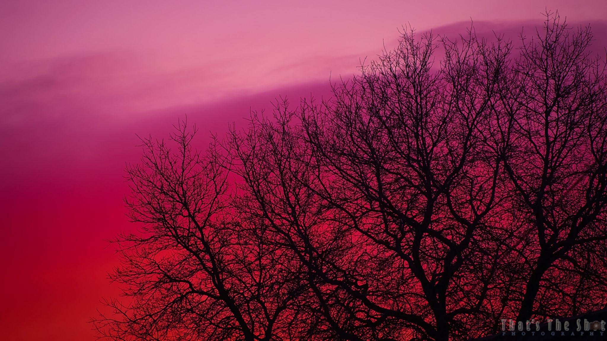 Sunset 12/9/2014 by ThatsTheShot