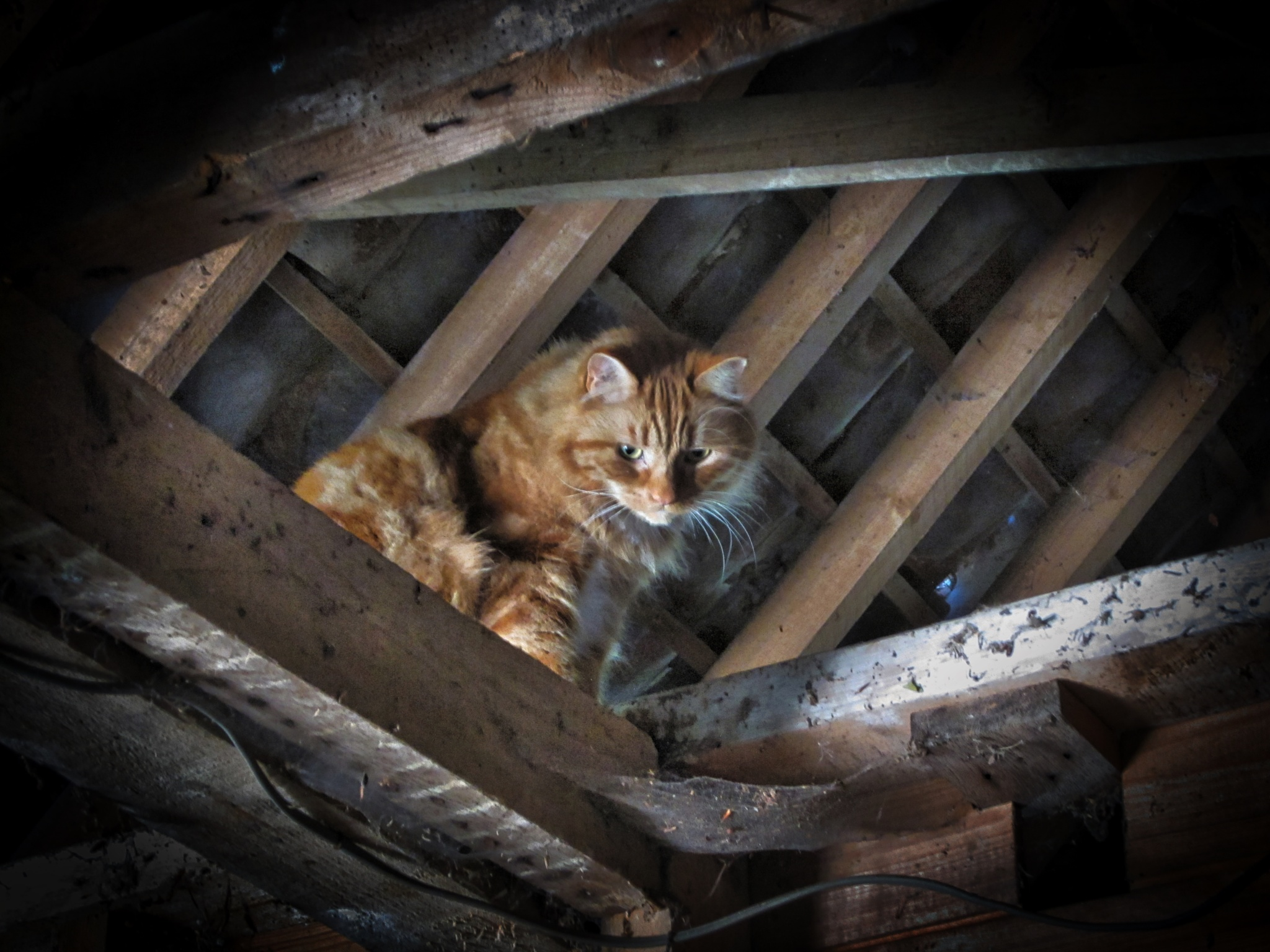 The beast in the barn....... by DJW