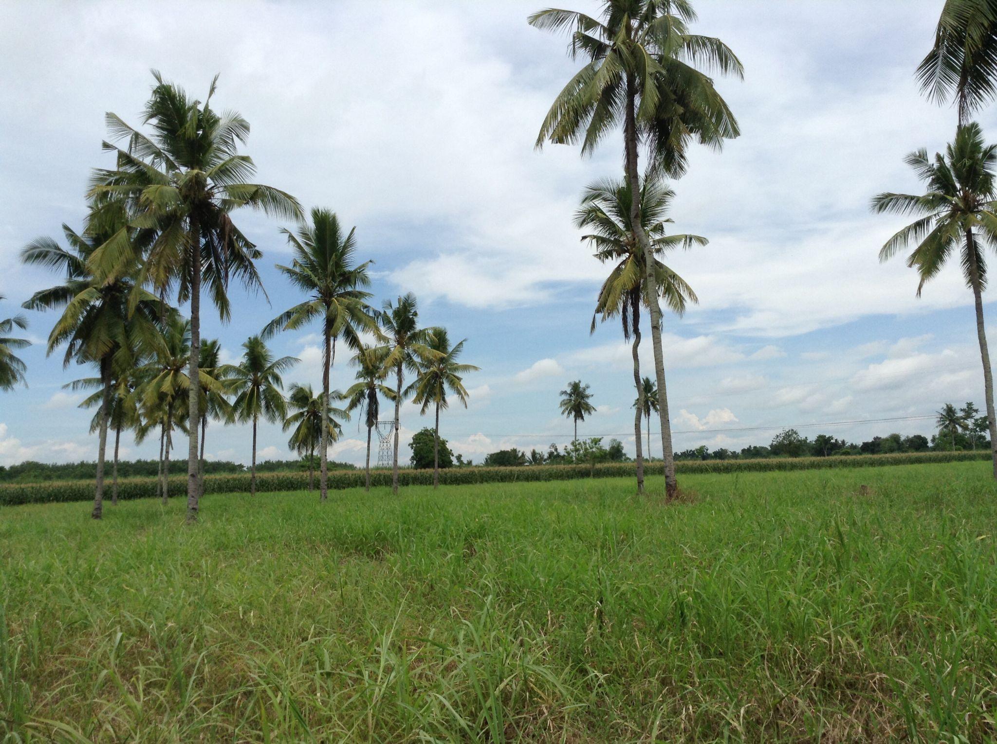 The Farm by beng.tabilla