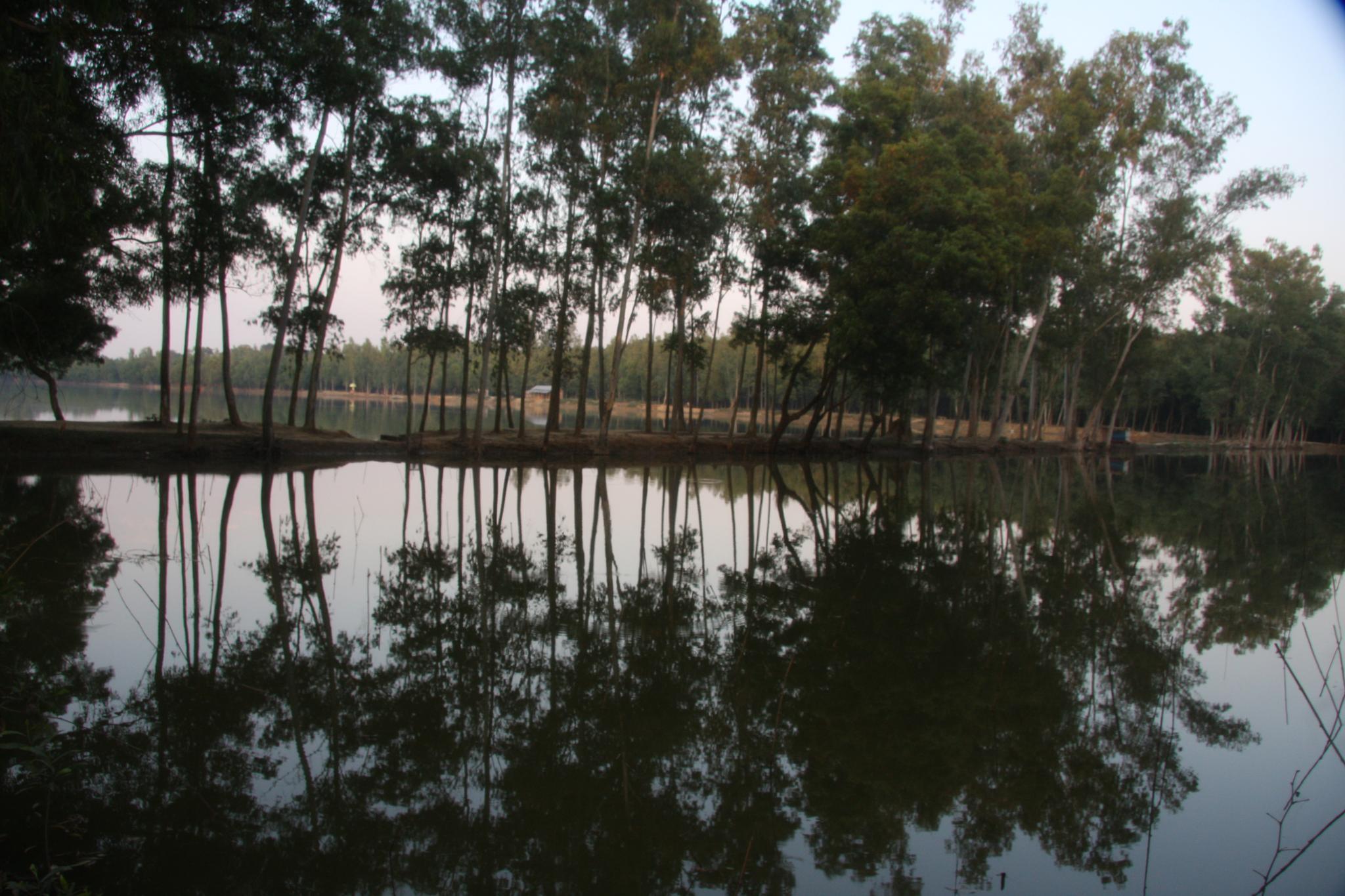 Reflection  by MAK Azad, Ph.D