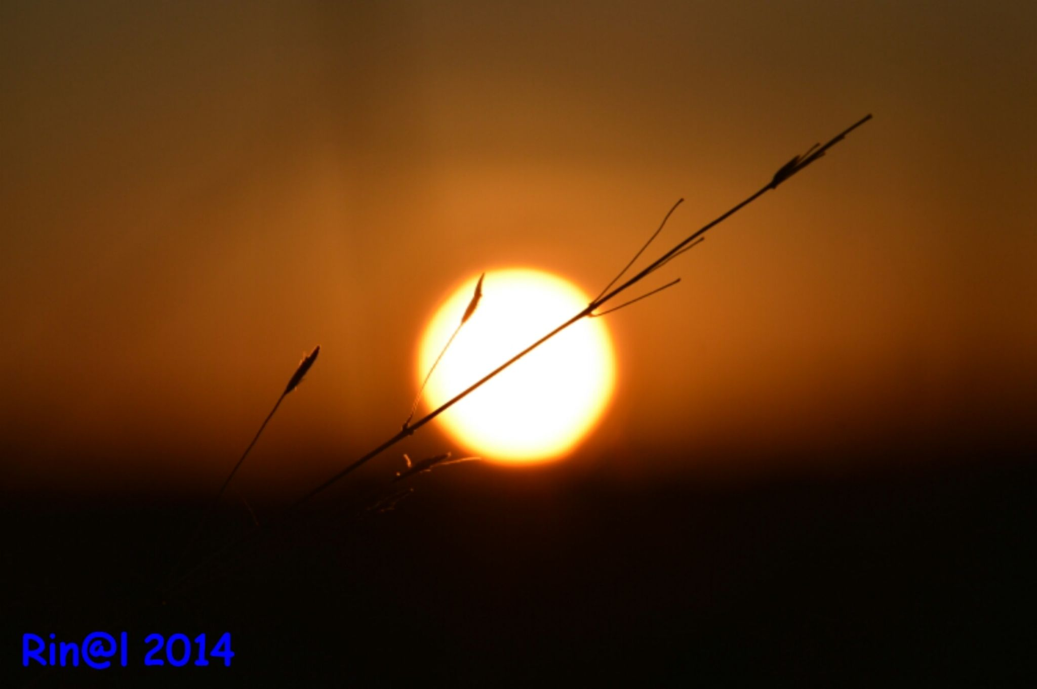 piece of grass in the morning by rinal.dino1