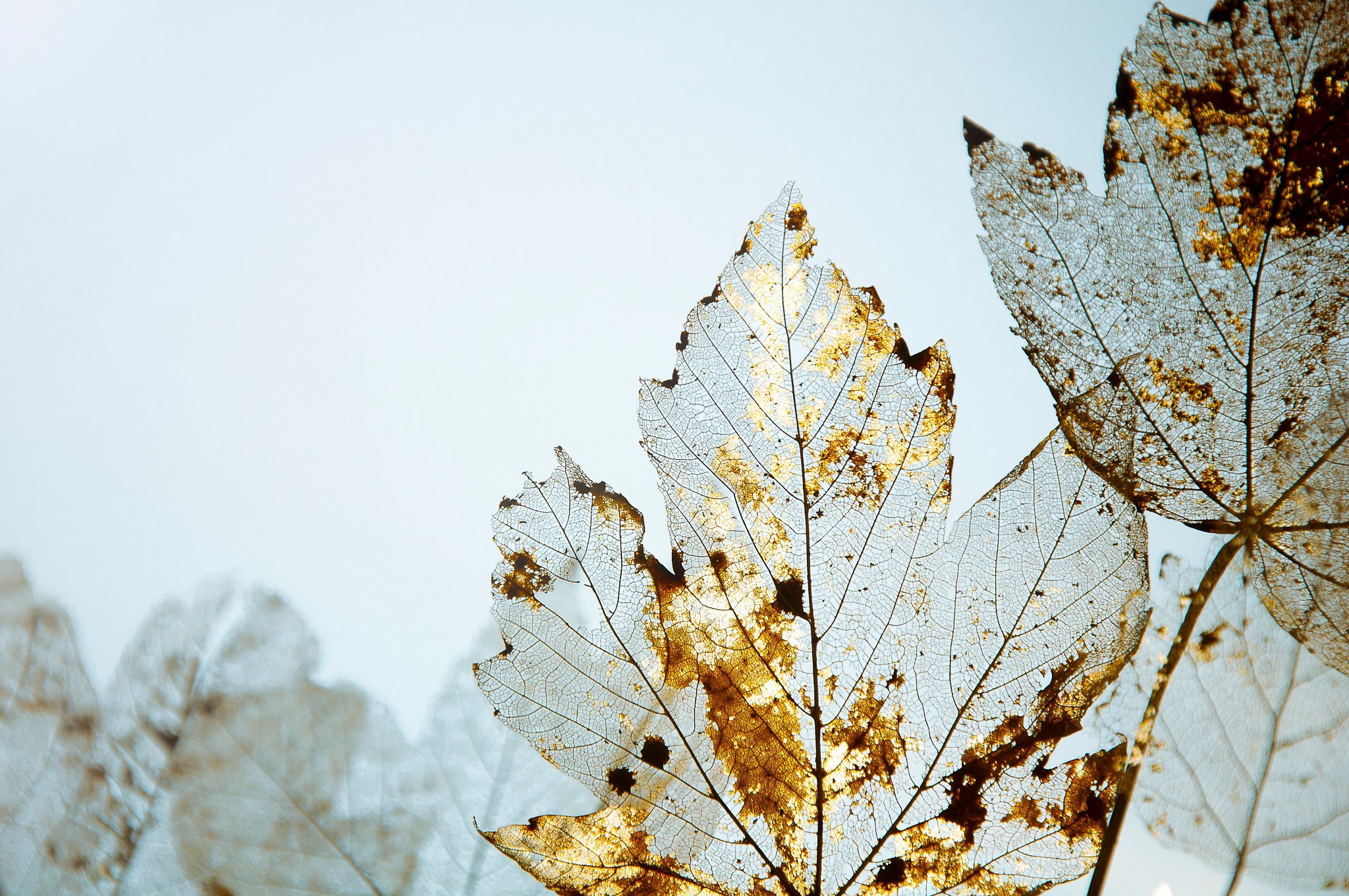 Golden leaf by Sonja Pixels