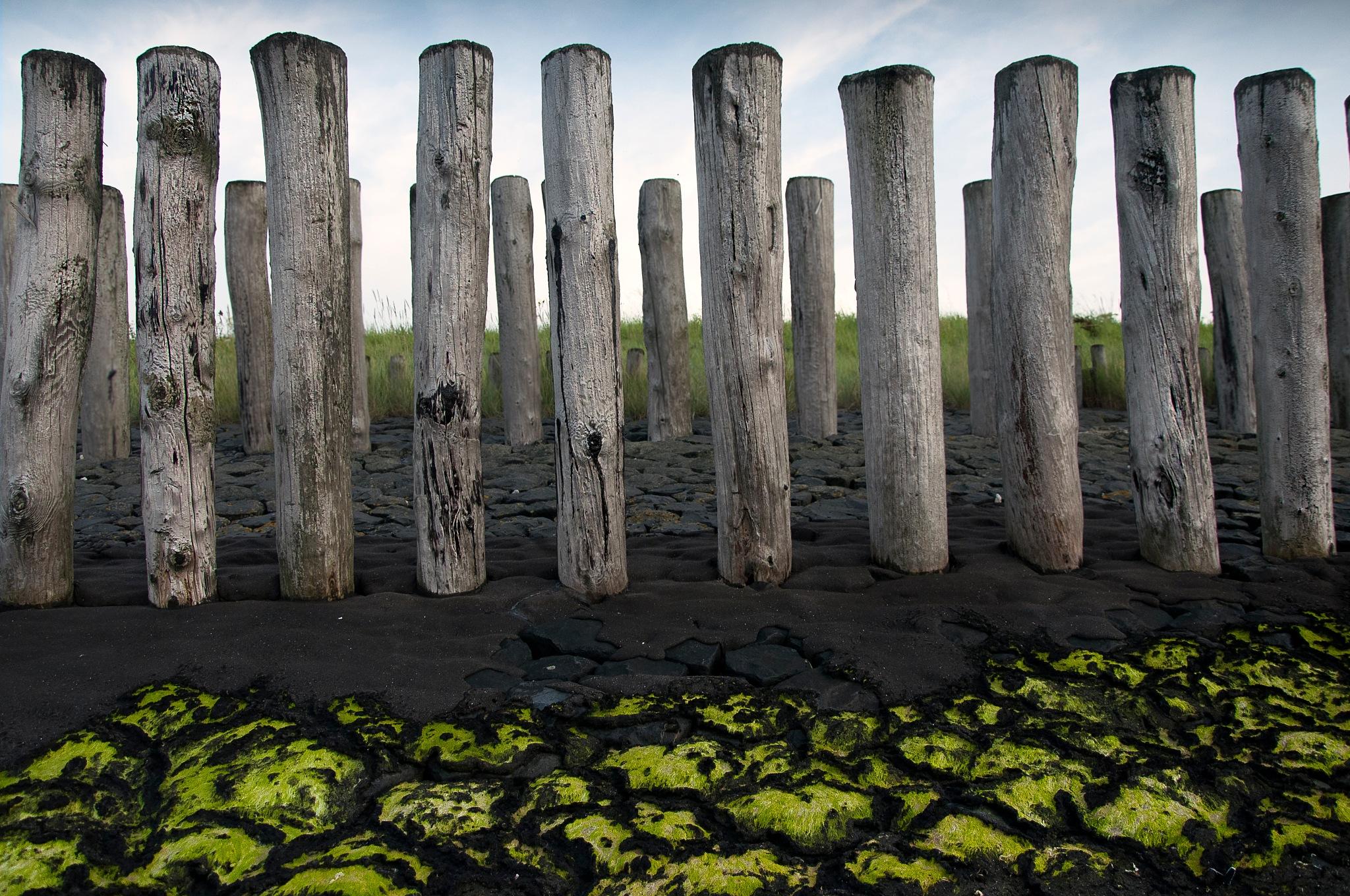 Contrast by Sonja Pixels